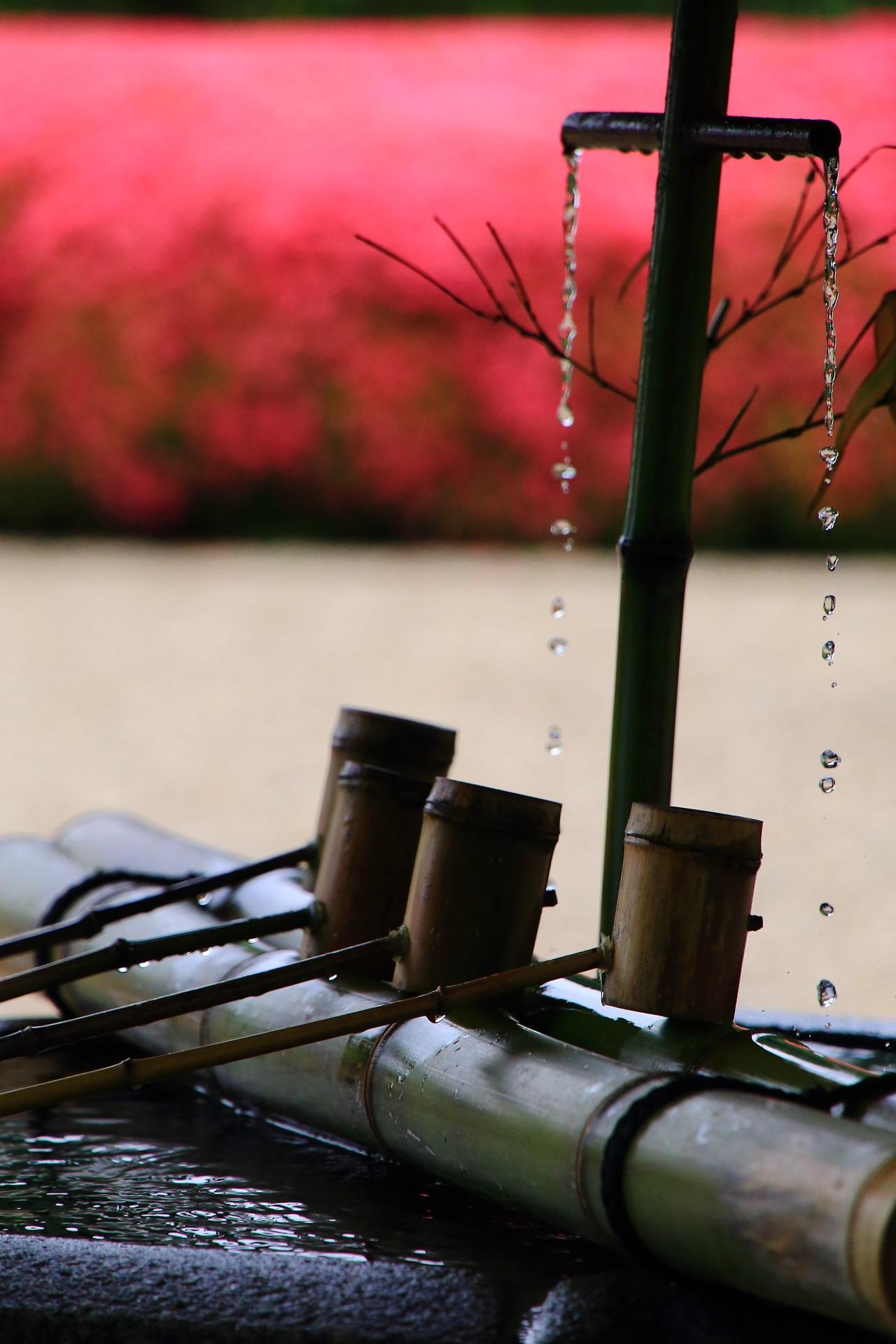 華やかな彩りに演出される善峯寺の風情ある手水舎