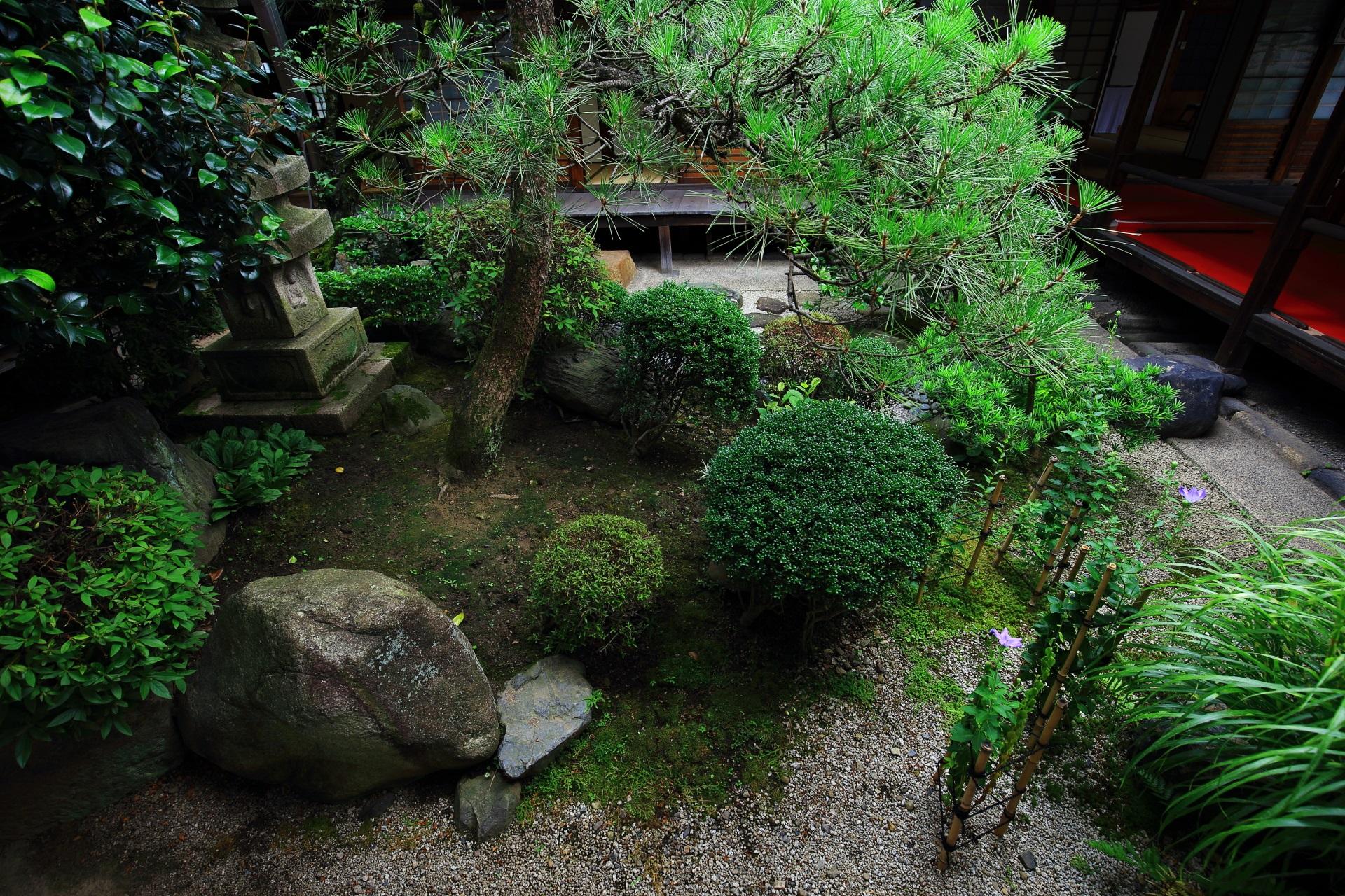 緑溢れる妙蓮寺の中庭