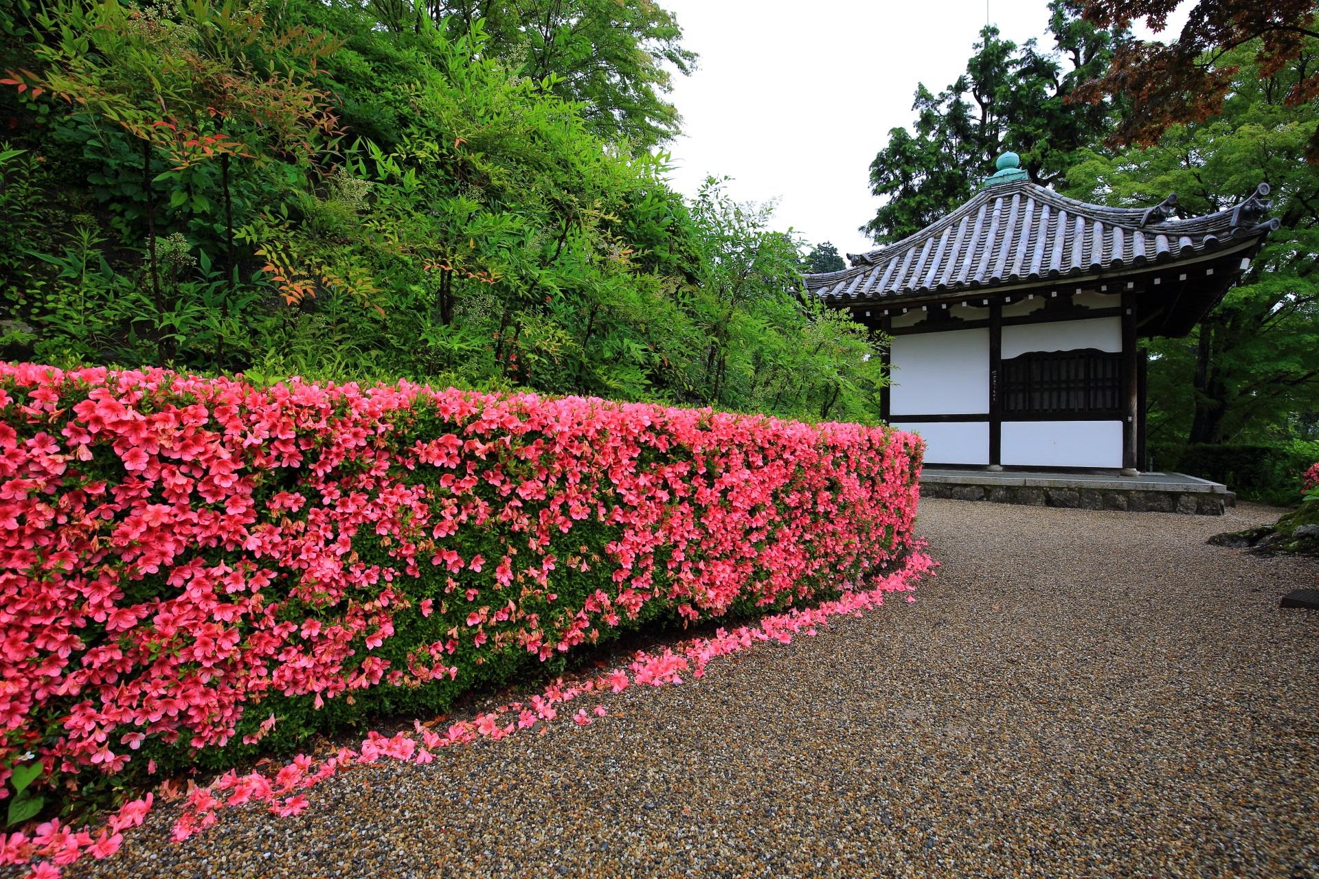 善峯寺の開山堂と綺麗な刈り込みに豪快に咲くサツキ