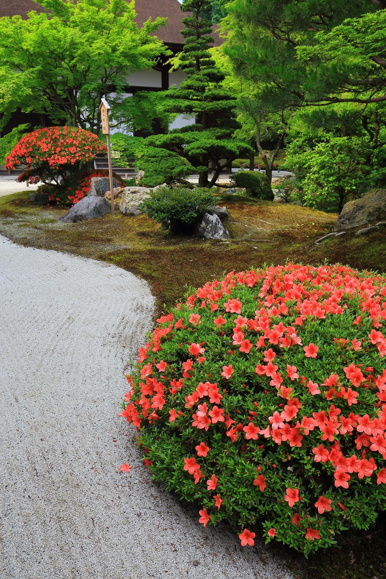 周りの風景や背景も重要な知恩院方丈庭園の極上のサツキ