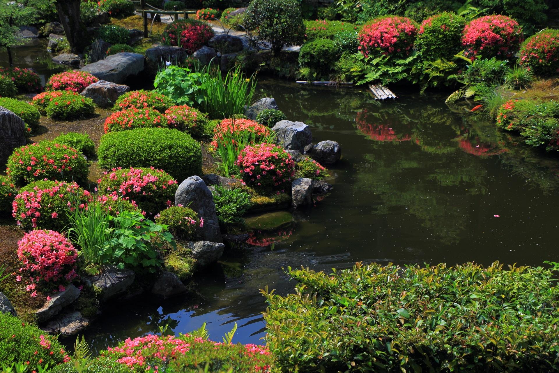 芙蓉池の煌く鮮やかな彩り