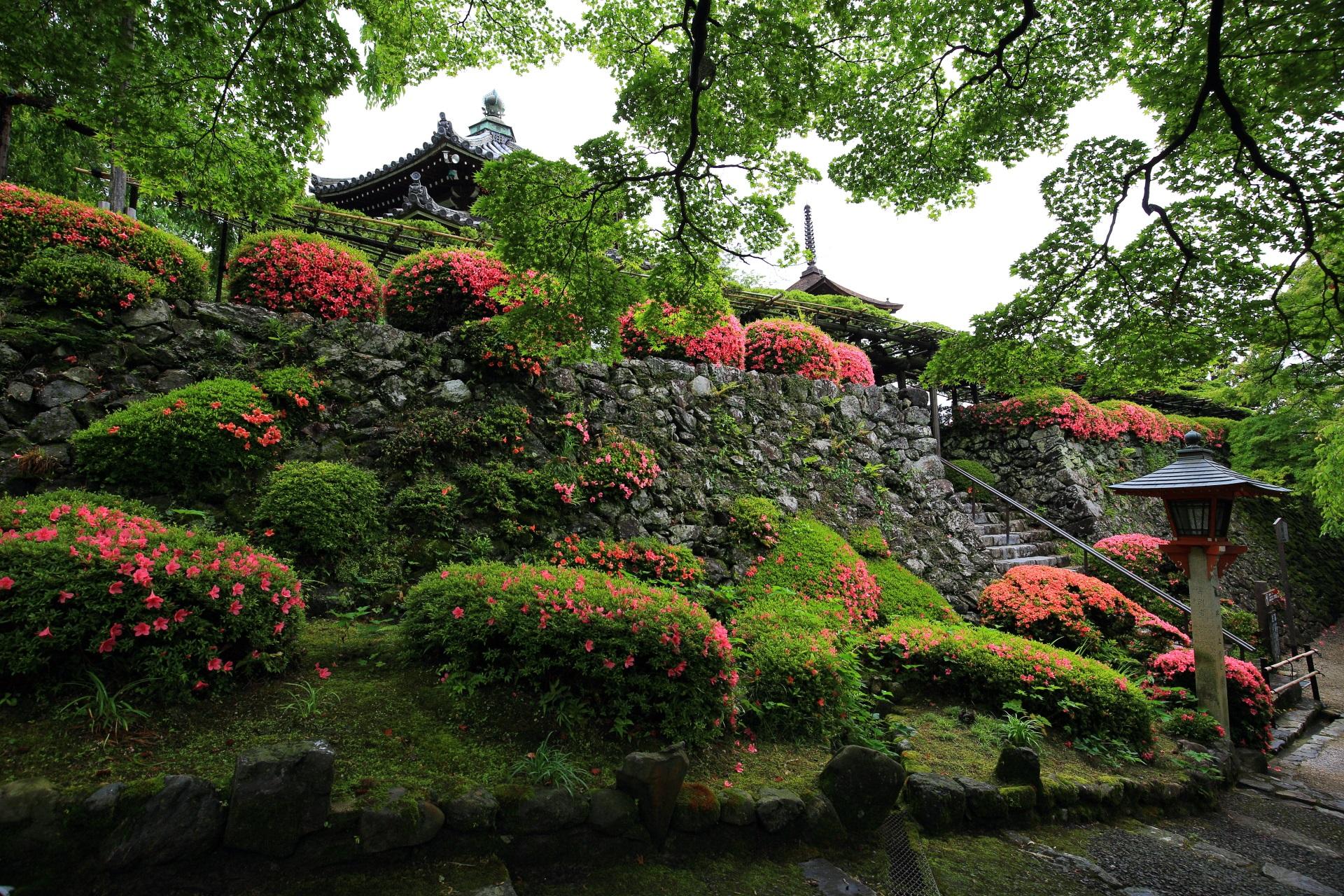 煌くサツキが彩りをそえる善峯寺の多宝塔と経堂