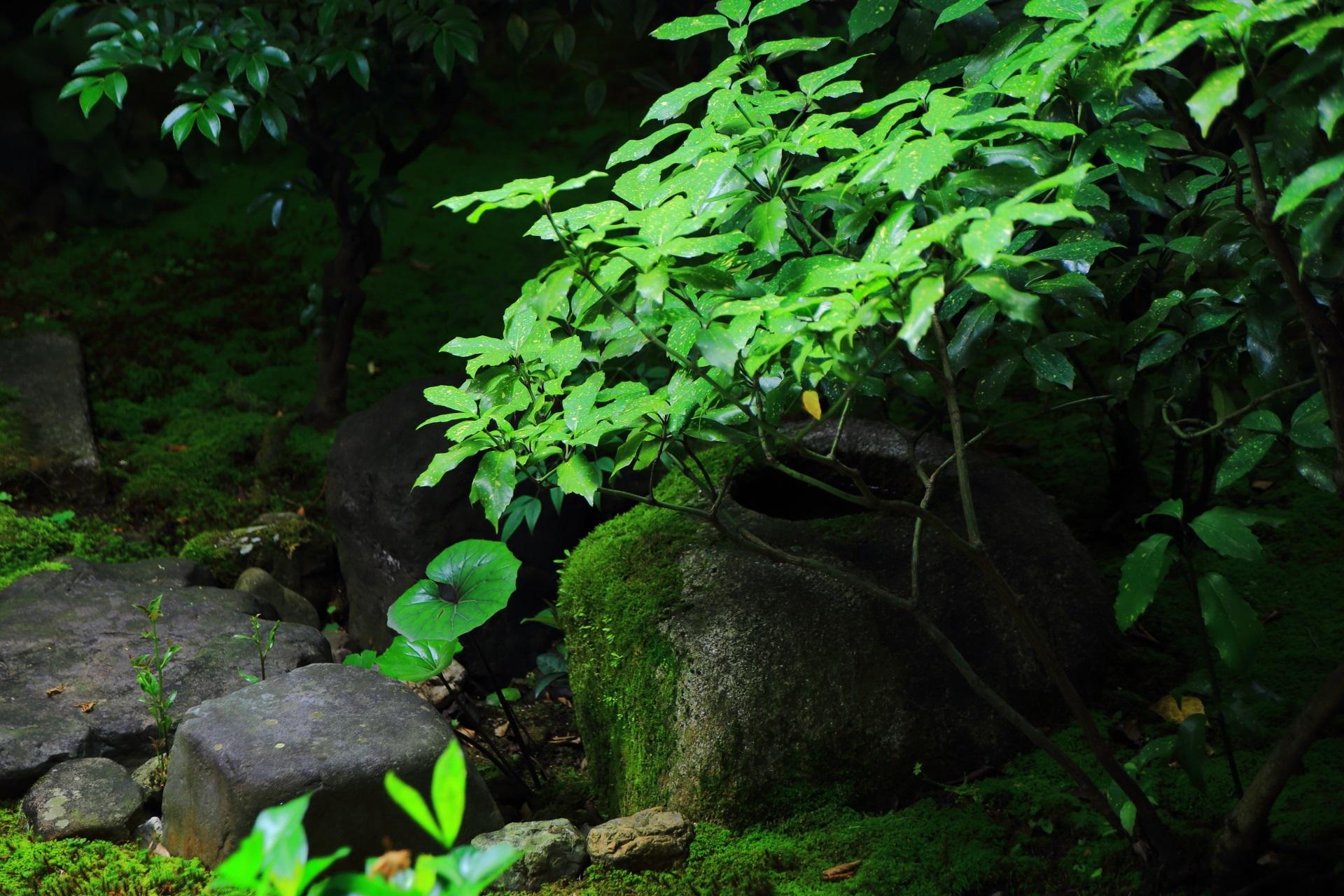 本法寺(ほんぽうじ)の風情ある庭園