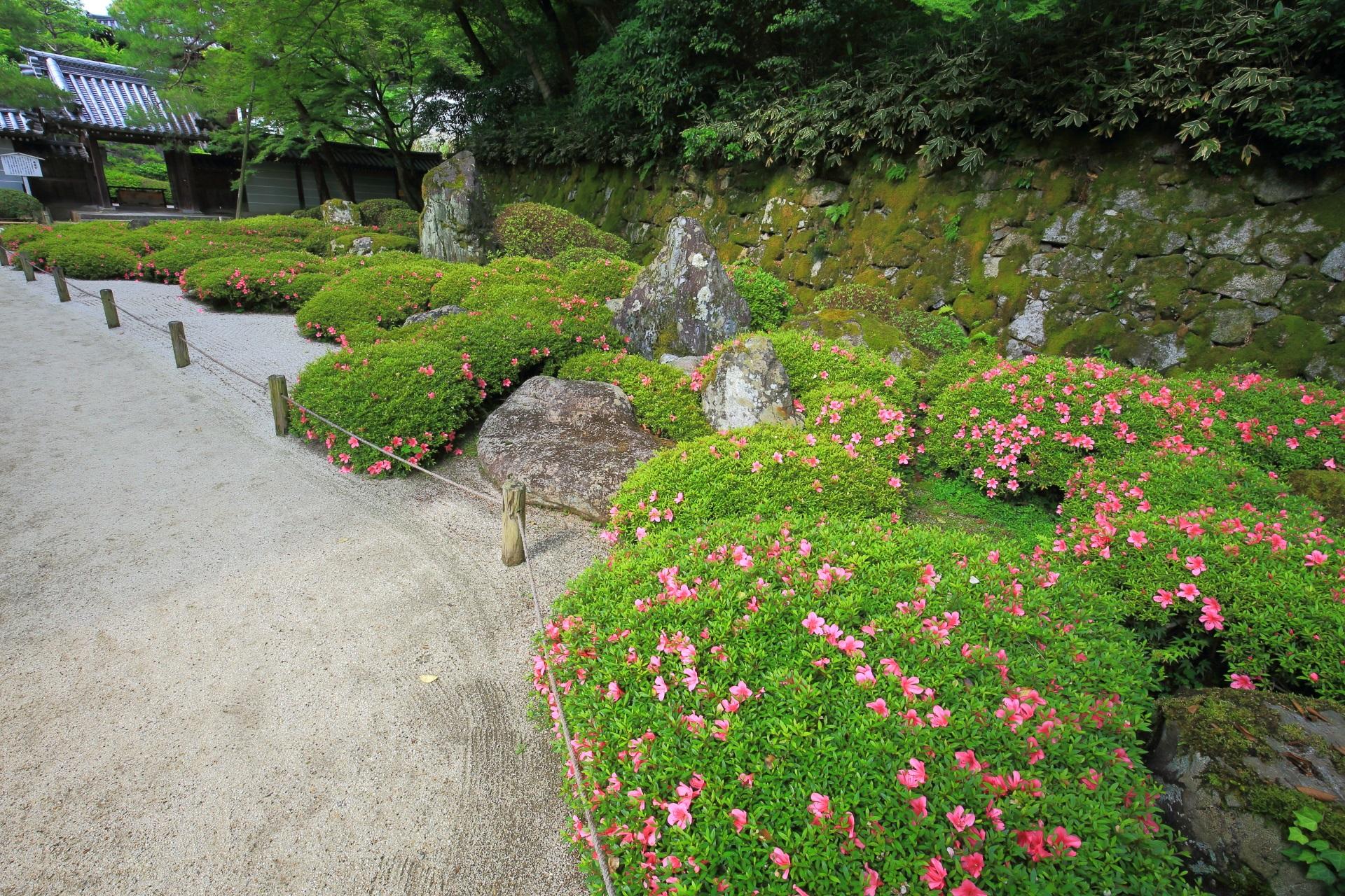 背景は苔の石垣で上はもみじの知恩院方丈庭園の二十五菩薩の庭