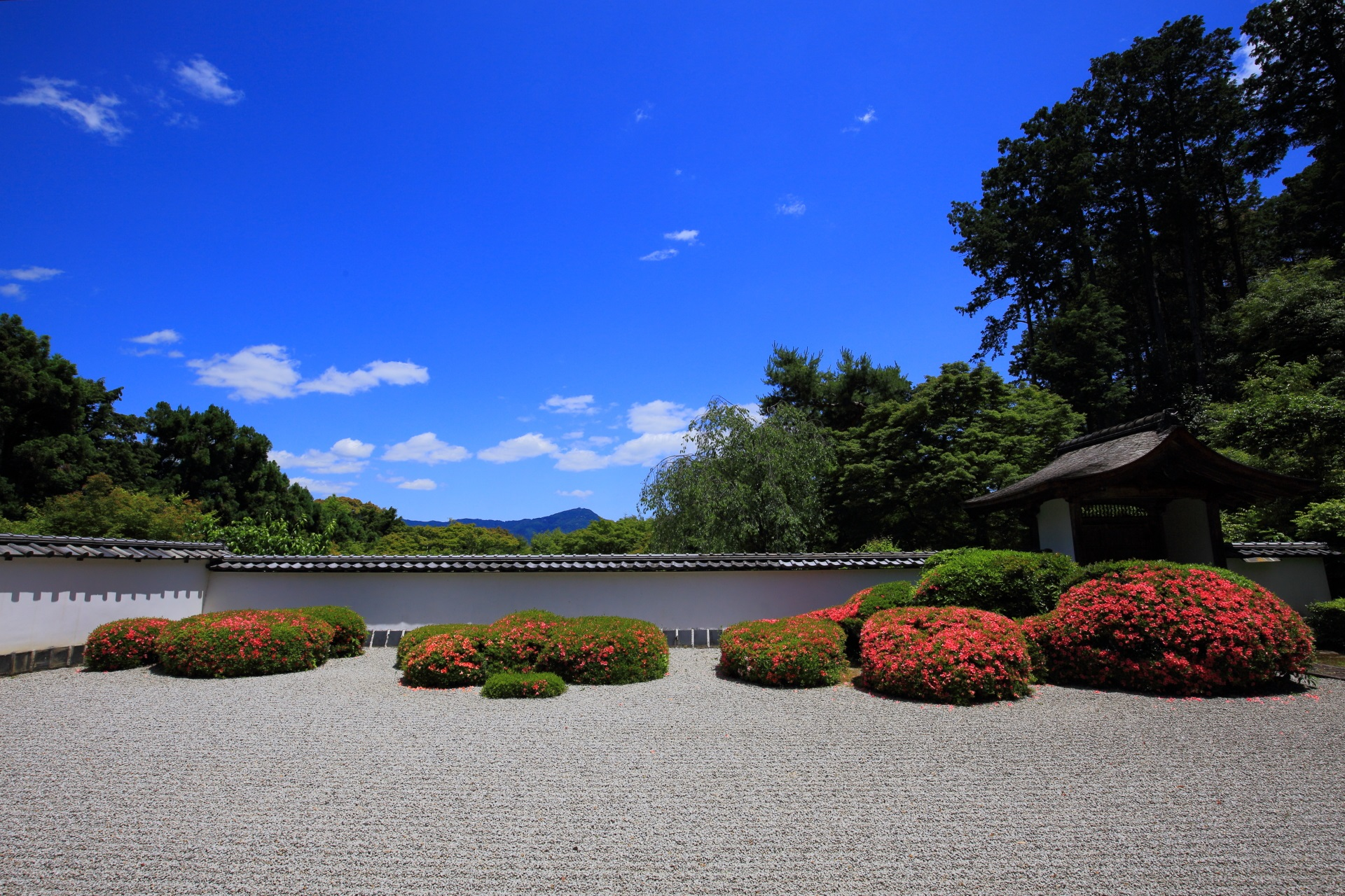 正伝寺の素晴らしいサツキと春の情景