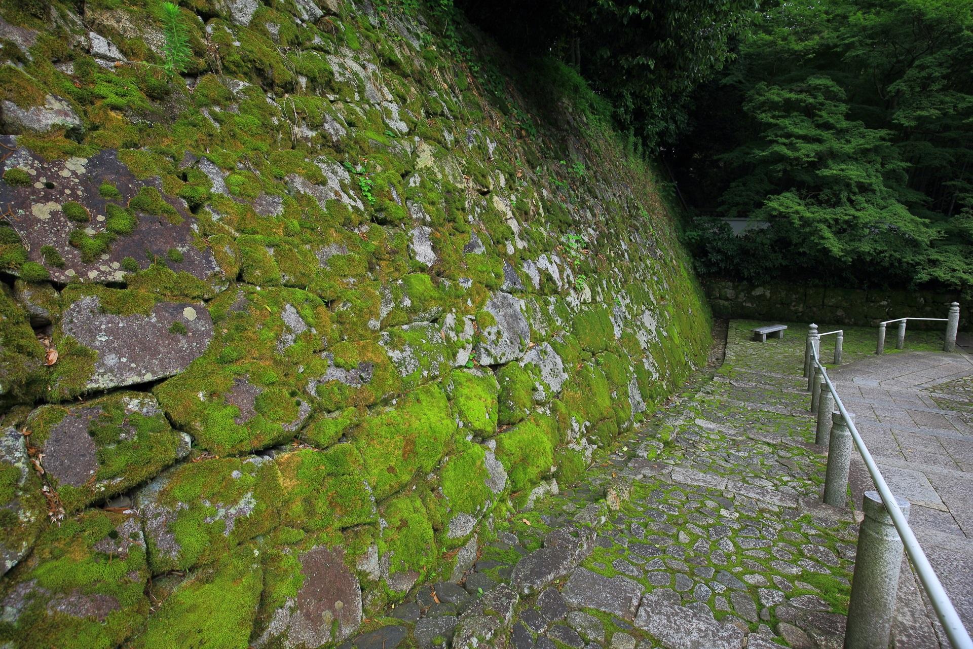 黒門坂の石垣の深い緑の苔