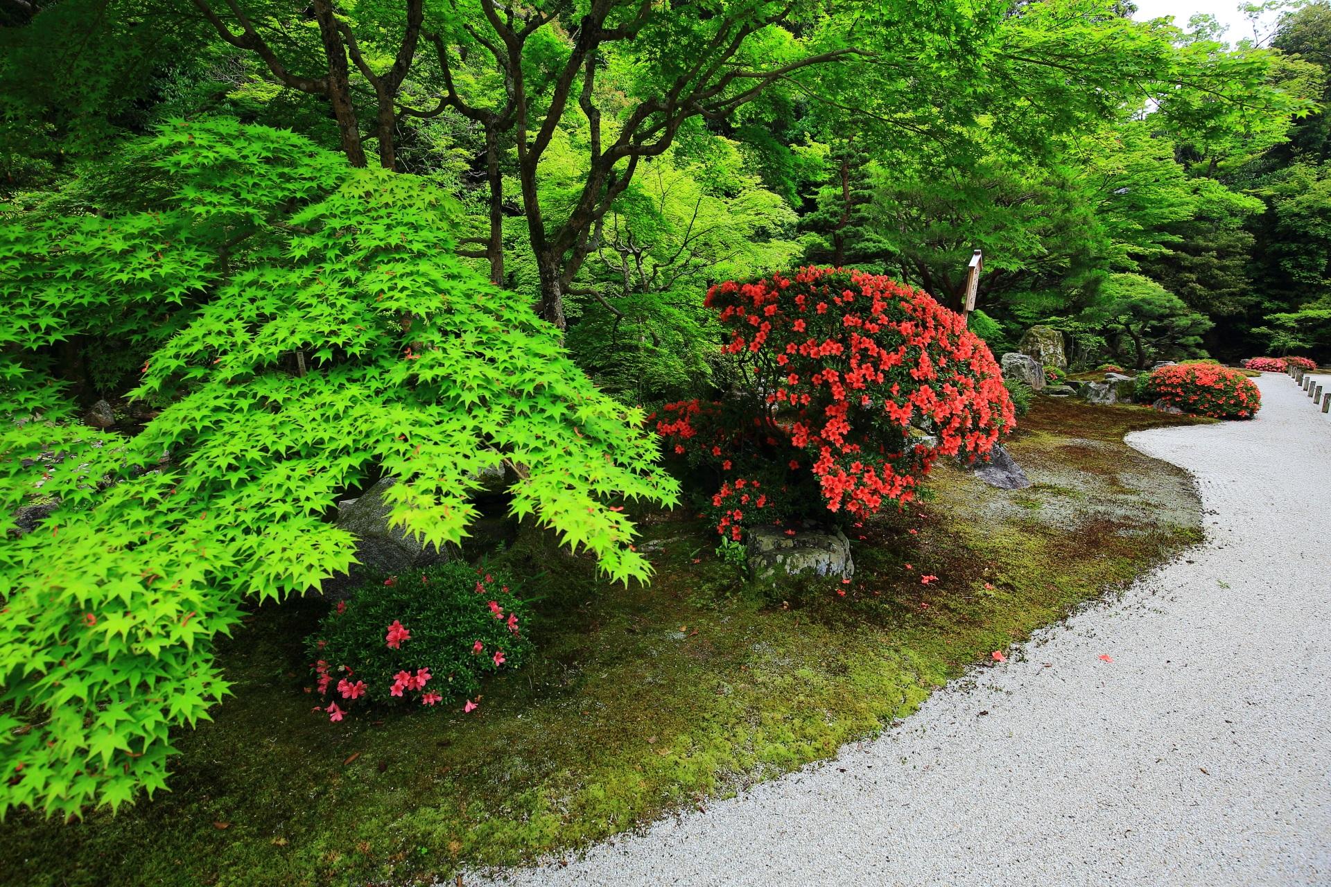 知恩院 方丈庭園 さつき 鮮やかな彩りと新緑