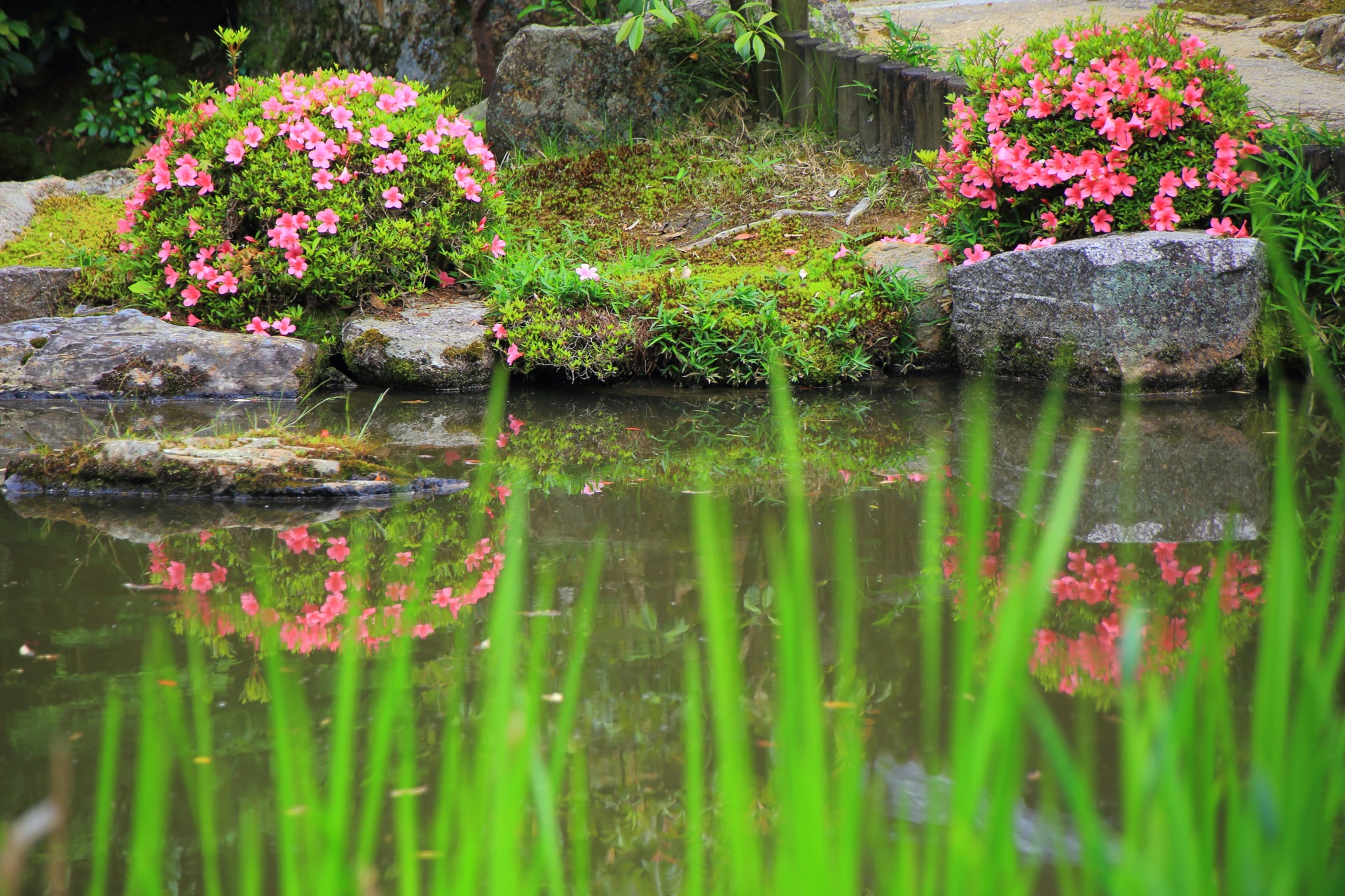 知恩院方丈庭園の綺麗なサツキの水鏡