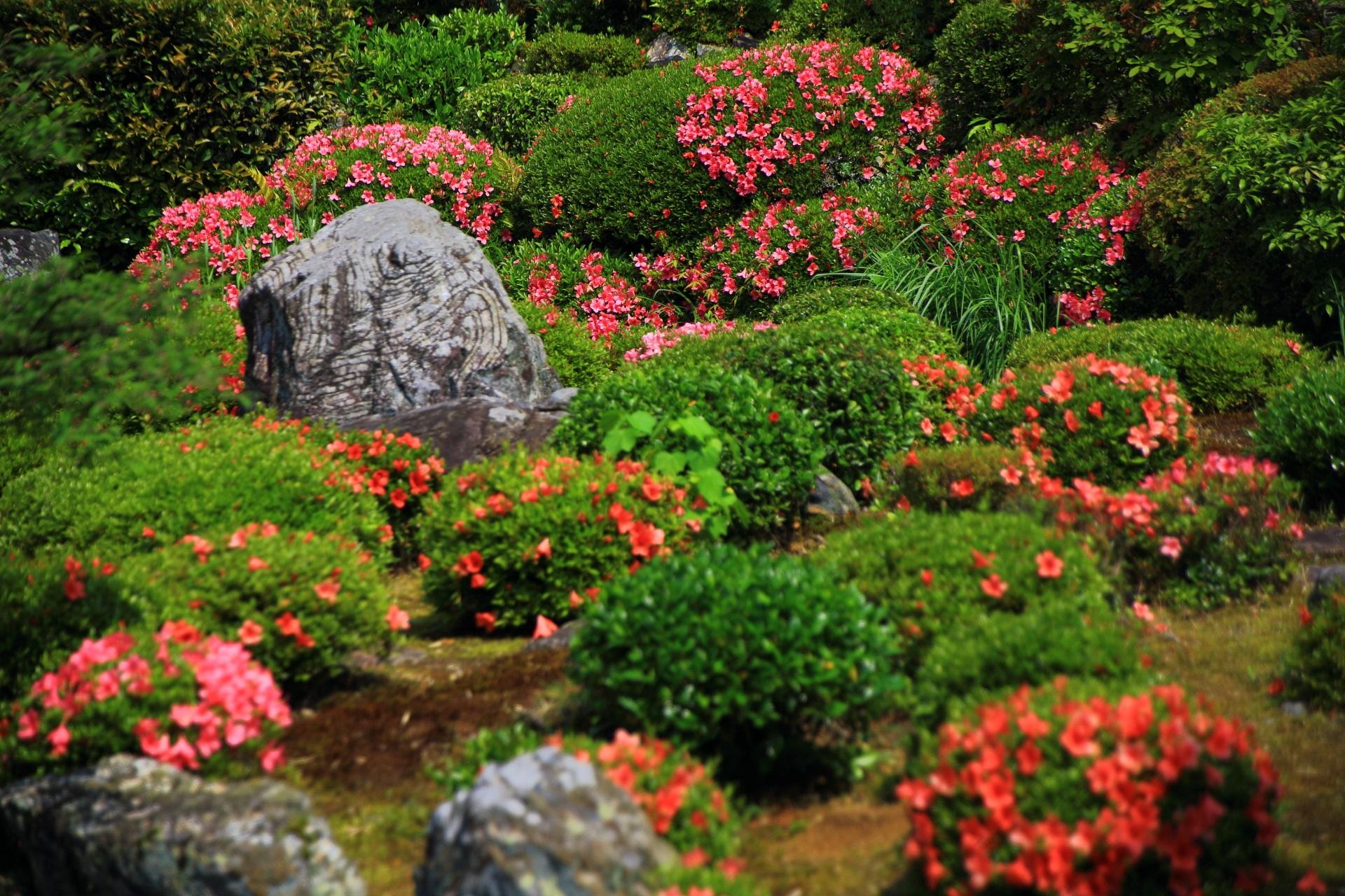 等持院の緑とピンクや朱色の綺麗なコントラスト