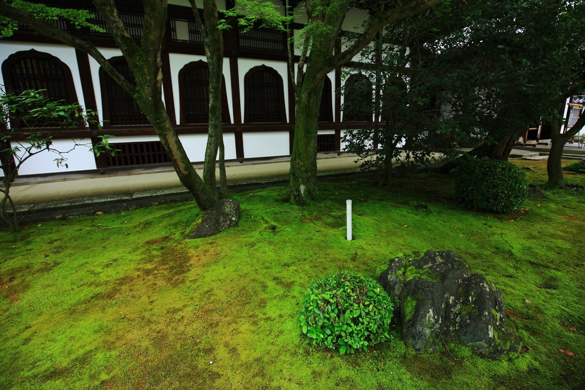 鮮やかな緑に覆われる知恩院の新玄関付近の苔