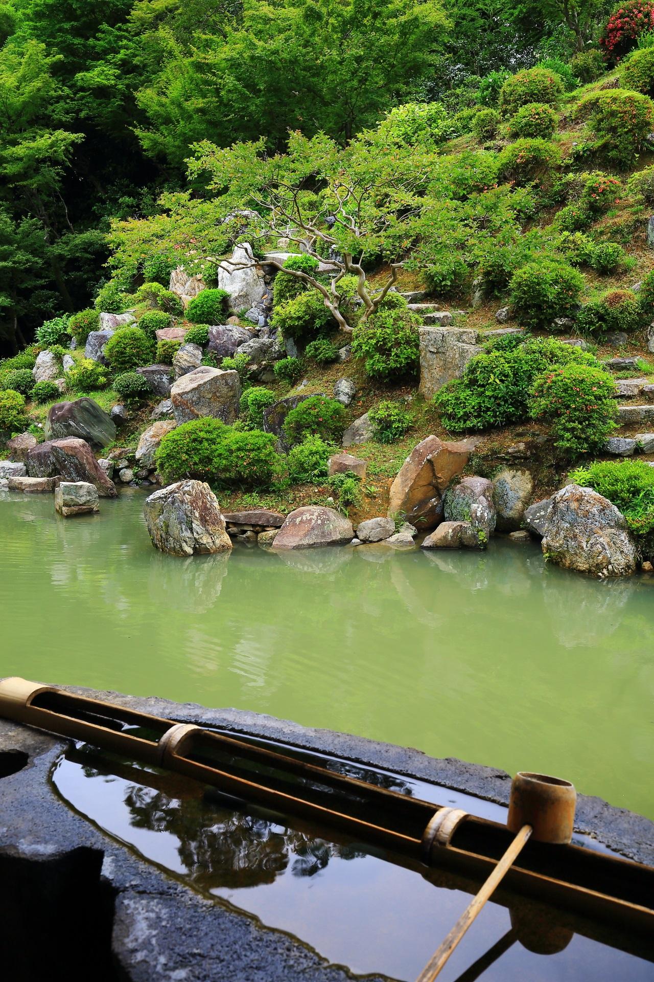 智積院のわざと濁らしている庭園の池