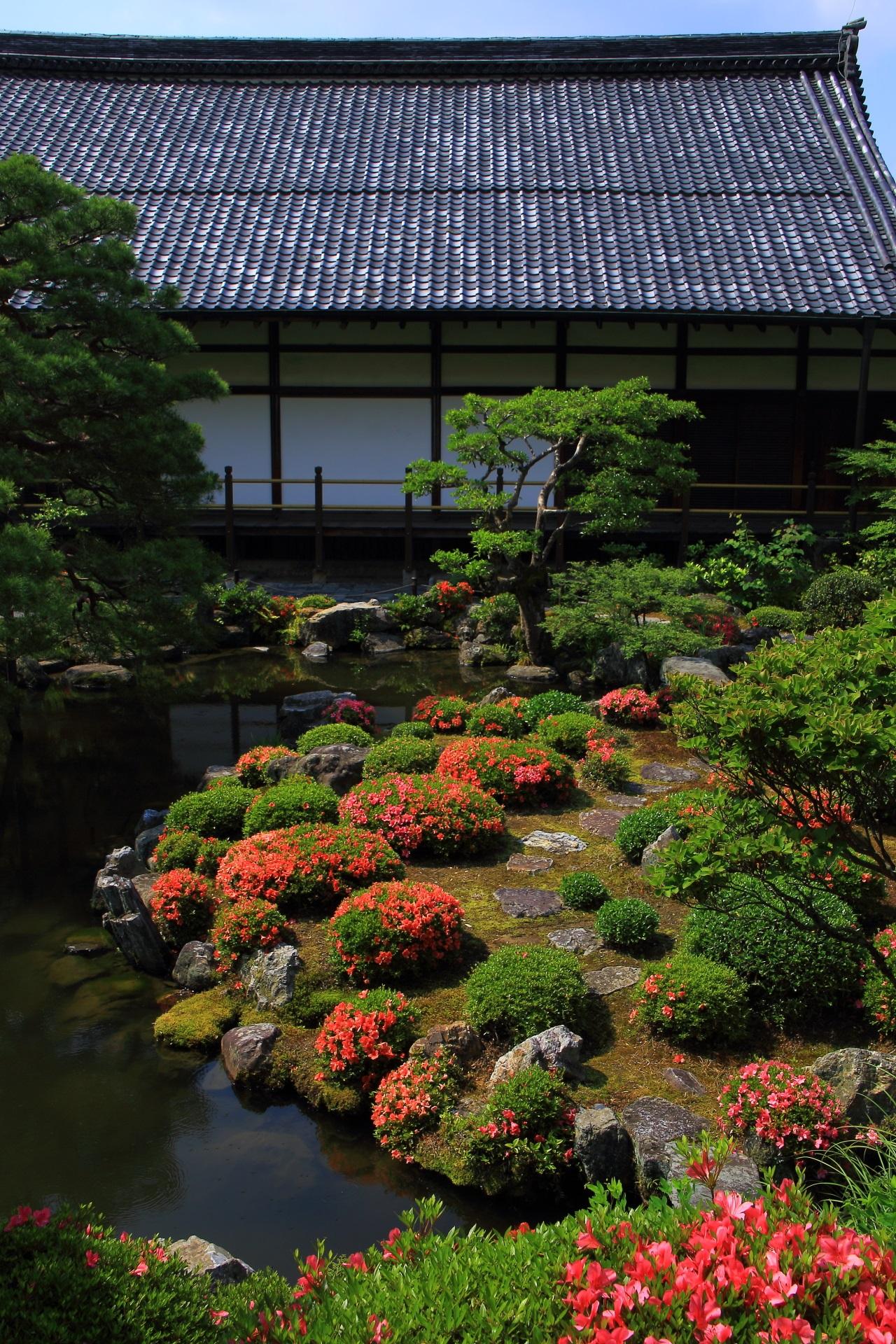 蓬莱島で見事に咲き誇るサツキと芙蓉池の向こうに見える方丈