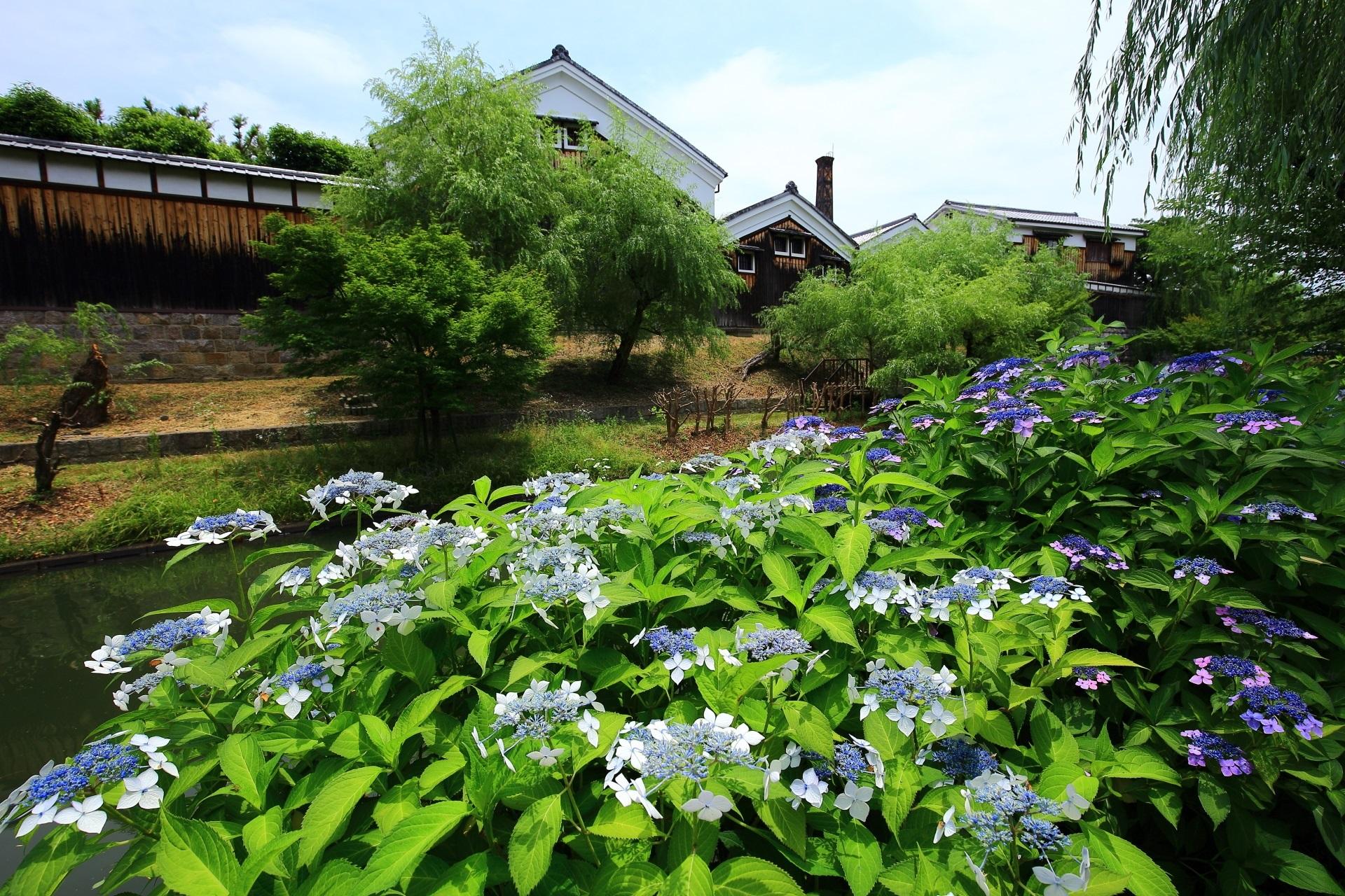 酒蔵の街として知られる伏見の月桂冠大倉記念館と紫陽花