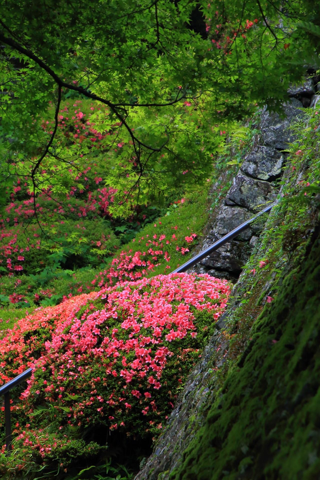まだまだ見るところがいっぱいある善峯寺のすばらしすぎるサツキと緑
