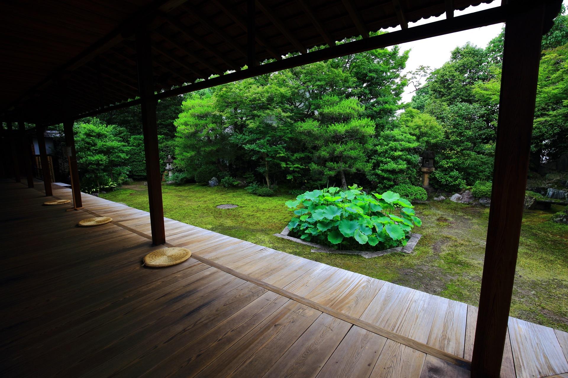 本法寺の巴の庭