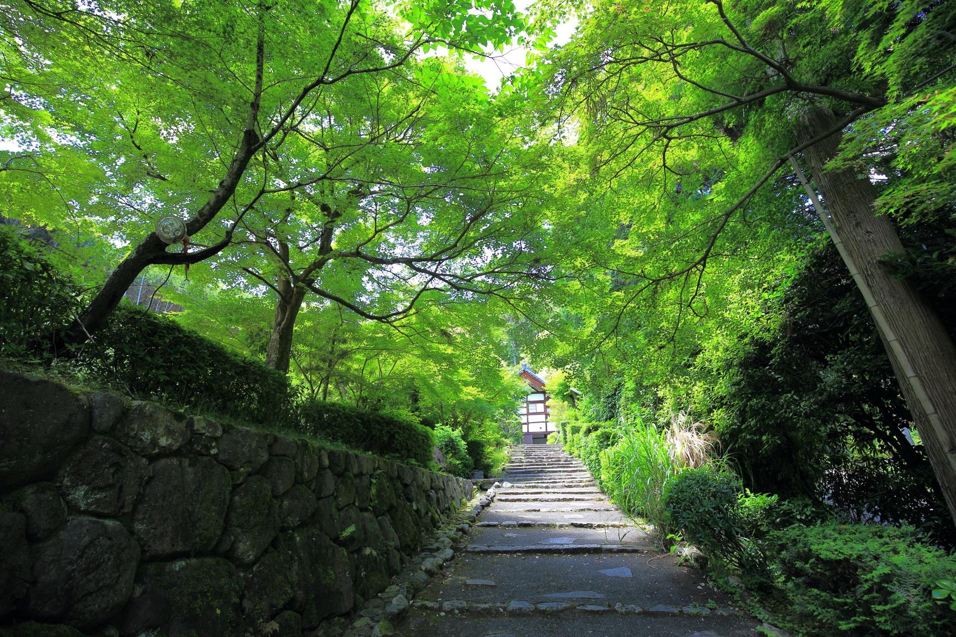 新緑につつまれた参道と美しい緑
