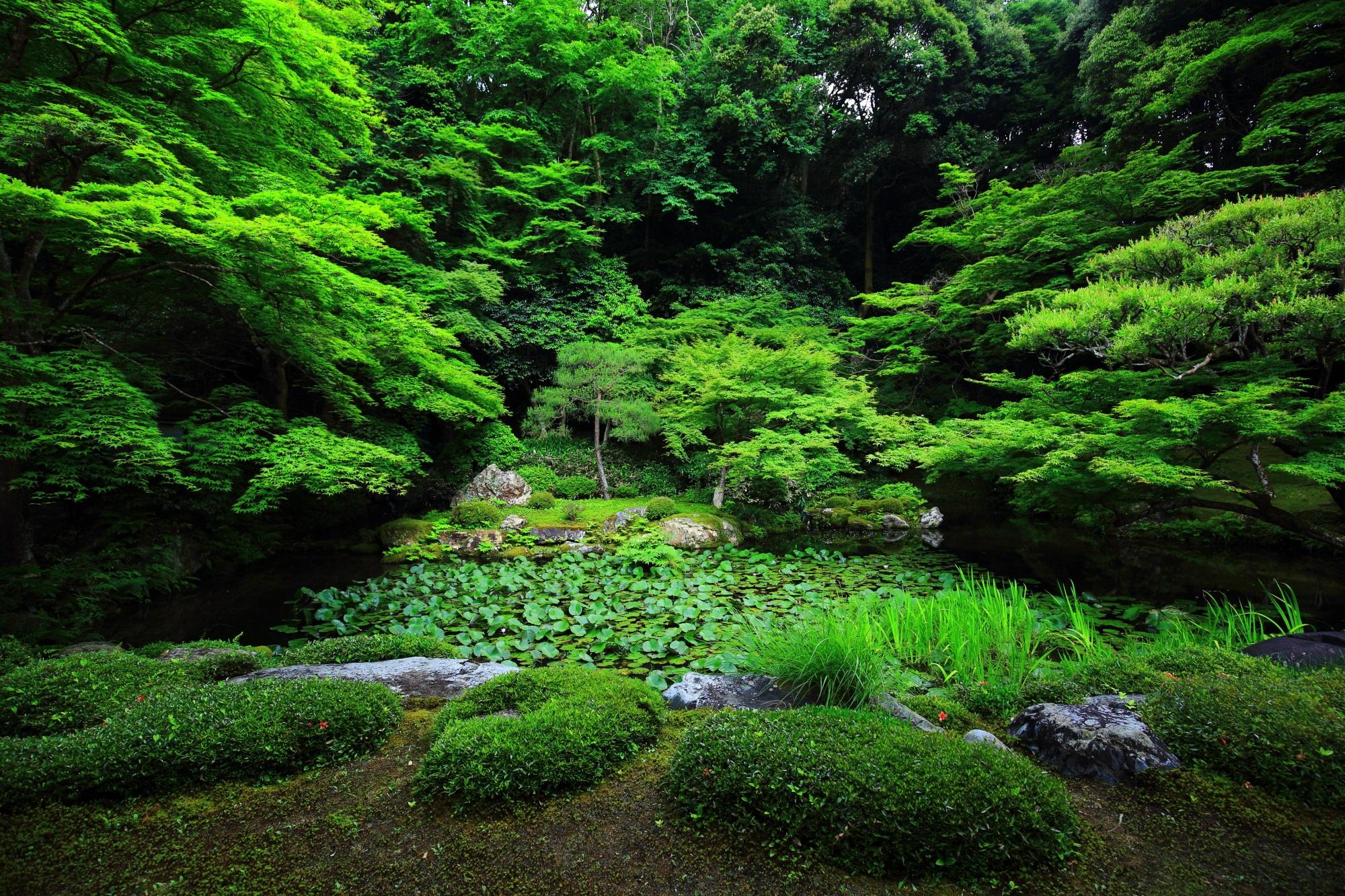 南禅院 青もみじ 南禅寺の深い緑の水辺の庭園