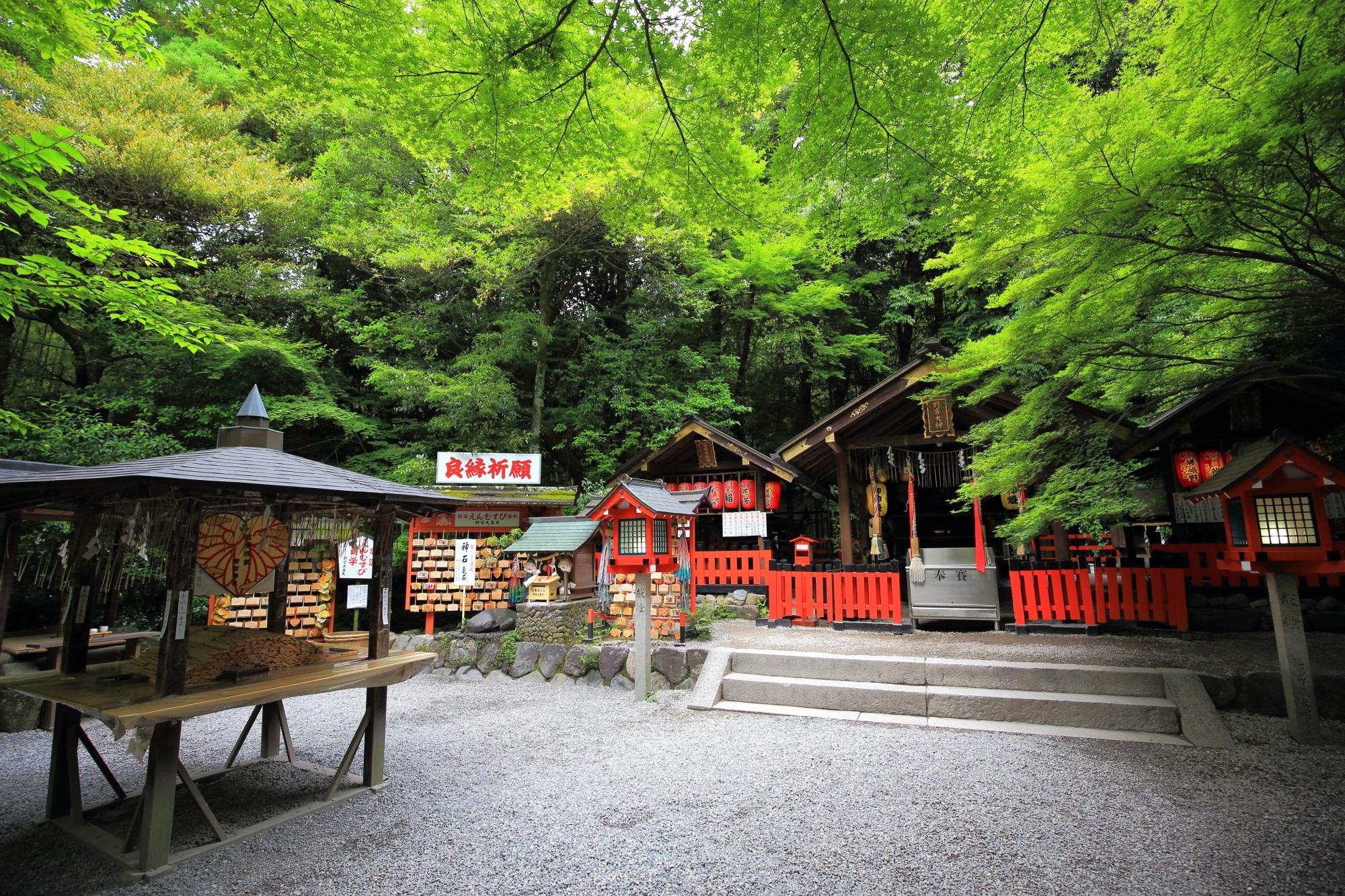 野宮神社 青もみじ 縁結びの神様の鮮やかな緑