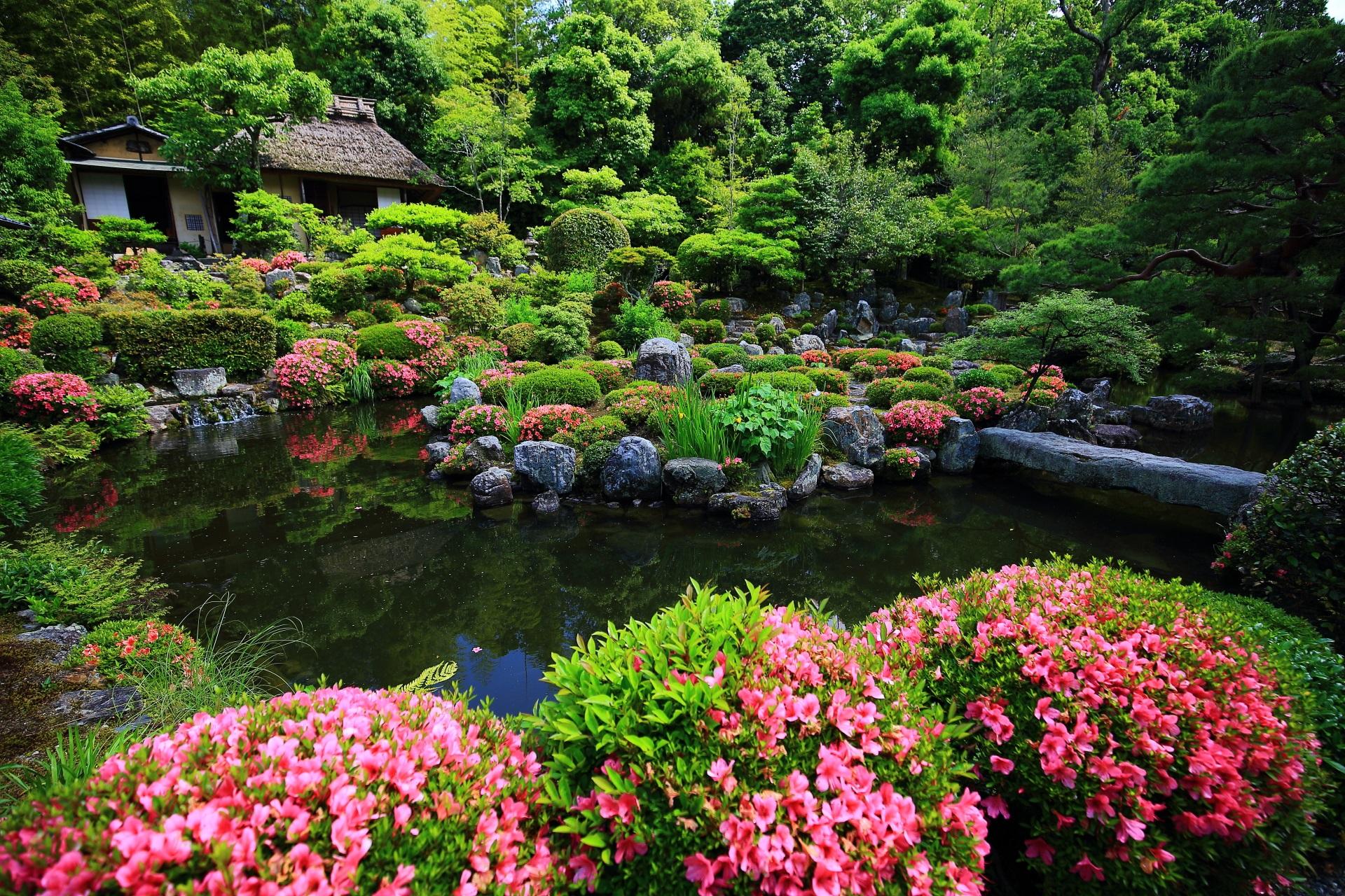 等持院 さつき 華やかな水辺の彩りと緑の庭園