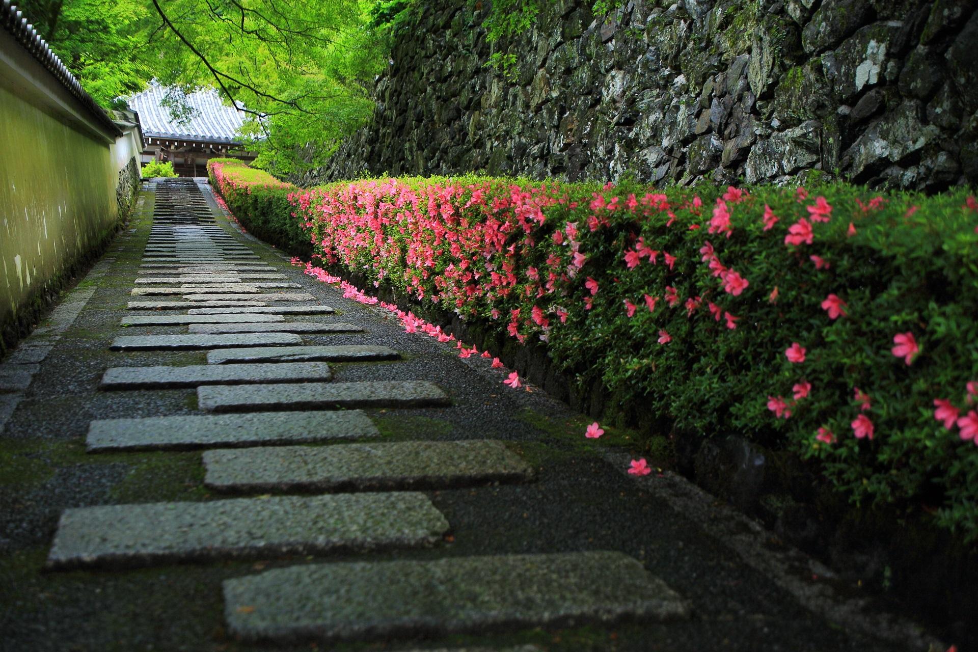 善峯寺 さつき 鮮やかなピンクと風情ある緑の彩り