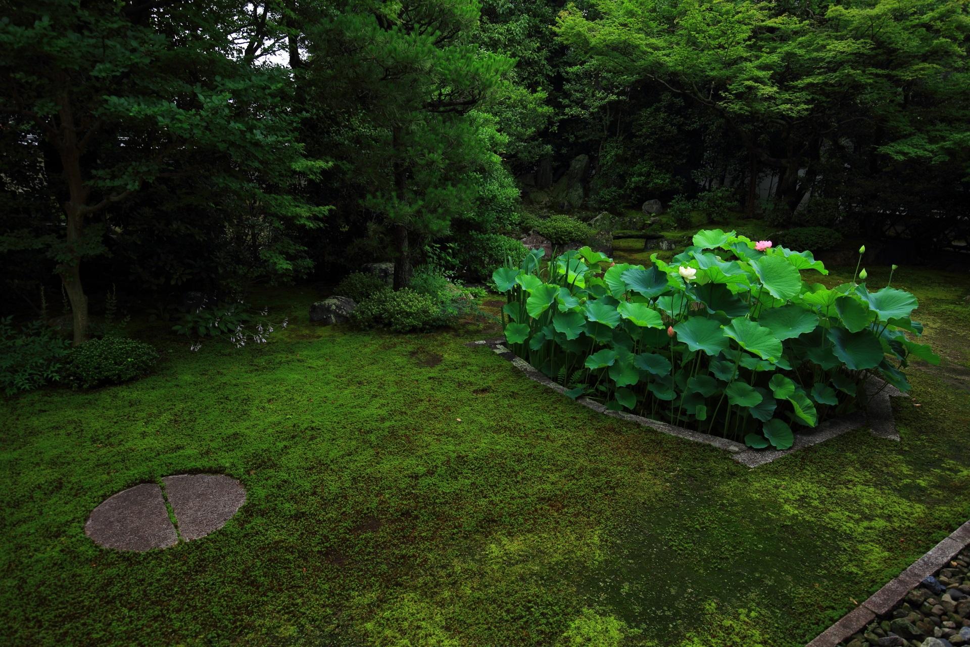 心が落ち着く本法寺の緑につつまれた隠れた名庭