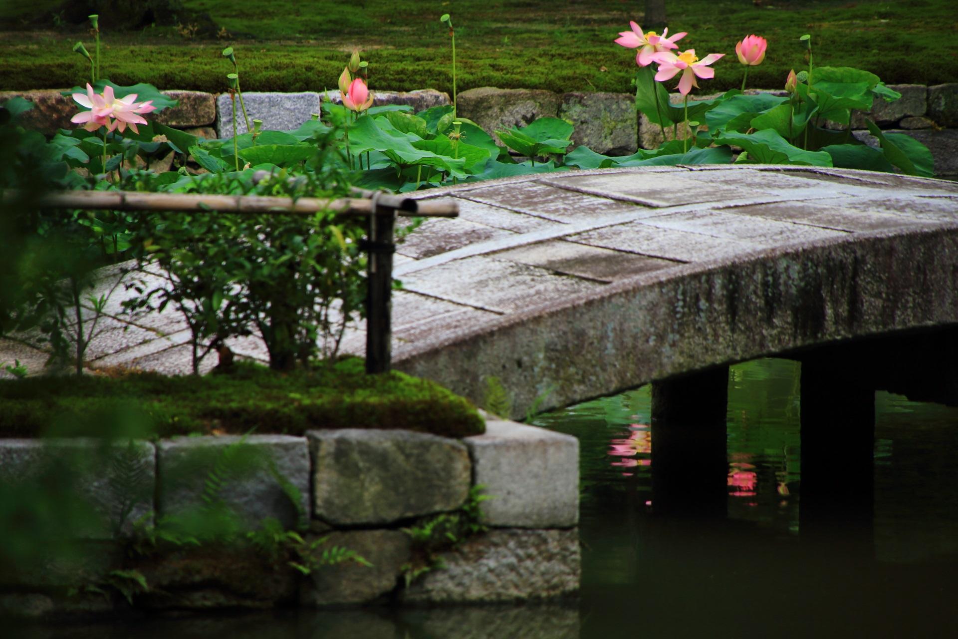 建仁寺の蓮池の中央の趣きある石橋と上品な蓮の花