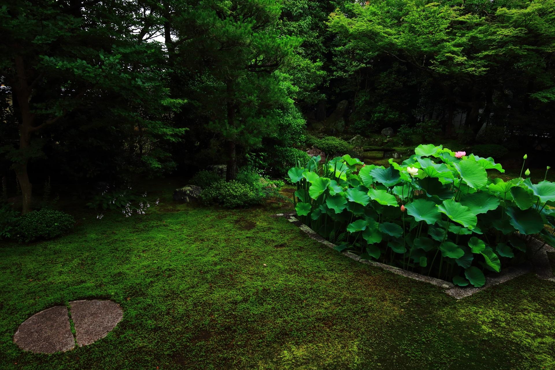 有名になって欲しい反面このままひっそりとしたままでもあって欲しい本法寺の庭園