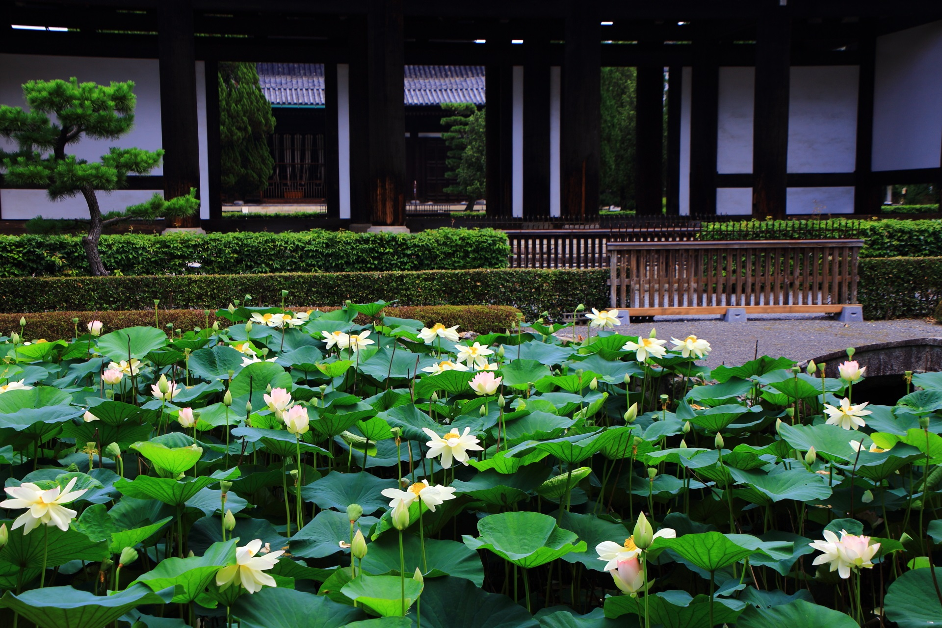 蓮池の思遠池と三門と仏殿