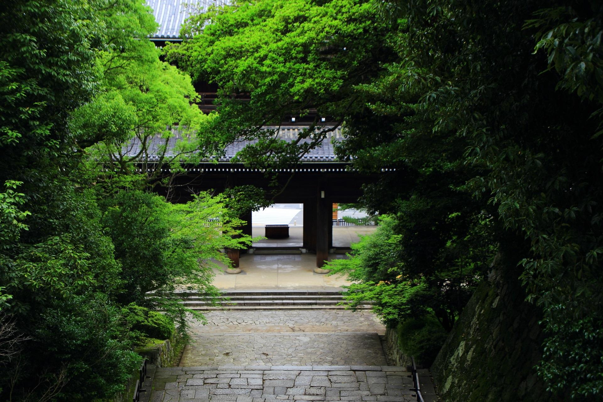 美しい緑につつまれた知恩院の三門