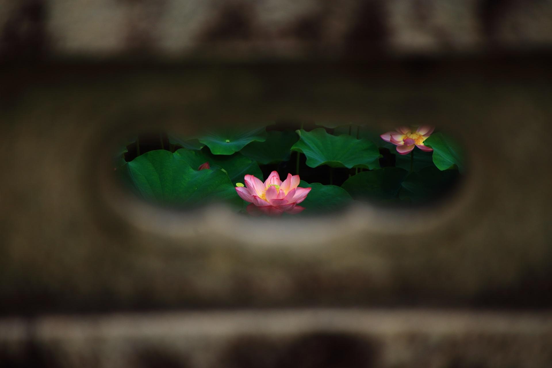 大谷本廟のめがね橋から眺めた非常に絵になる蓮の花
