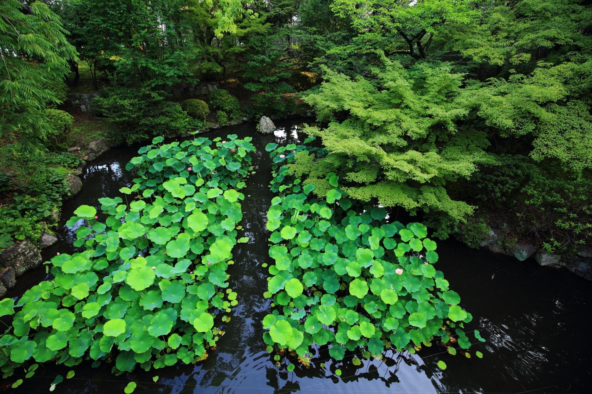 大谷本廟の円通橋から見下ろす緑が美しい皓月池(こうげついけ)