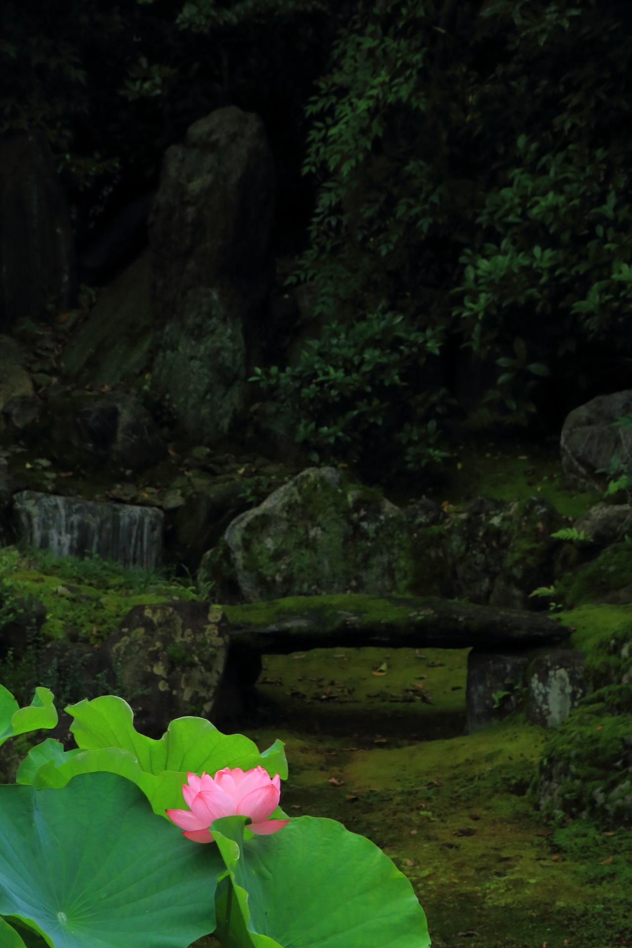巴の庭の築山と枯瀧と満開の蓮の花