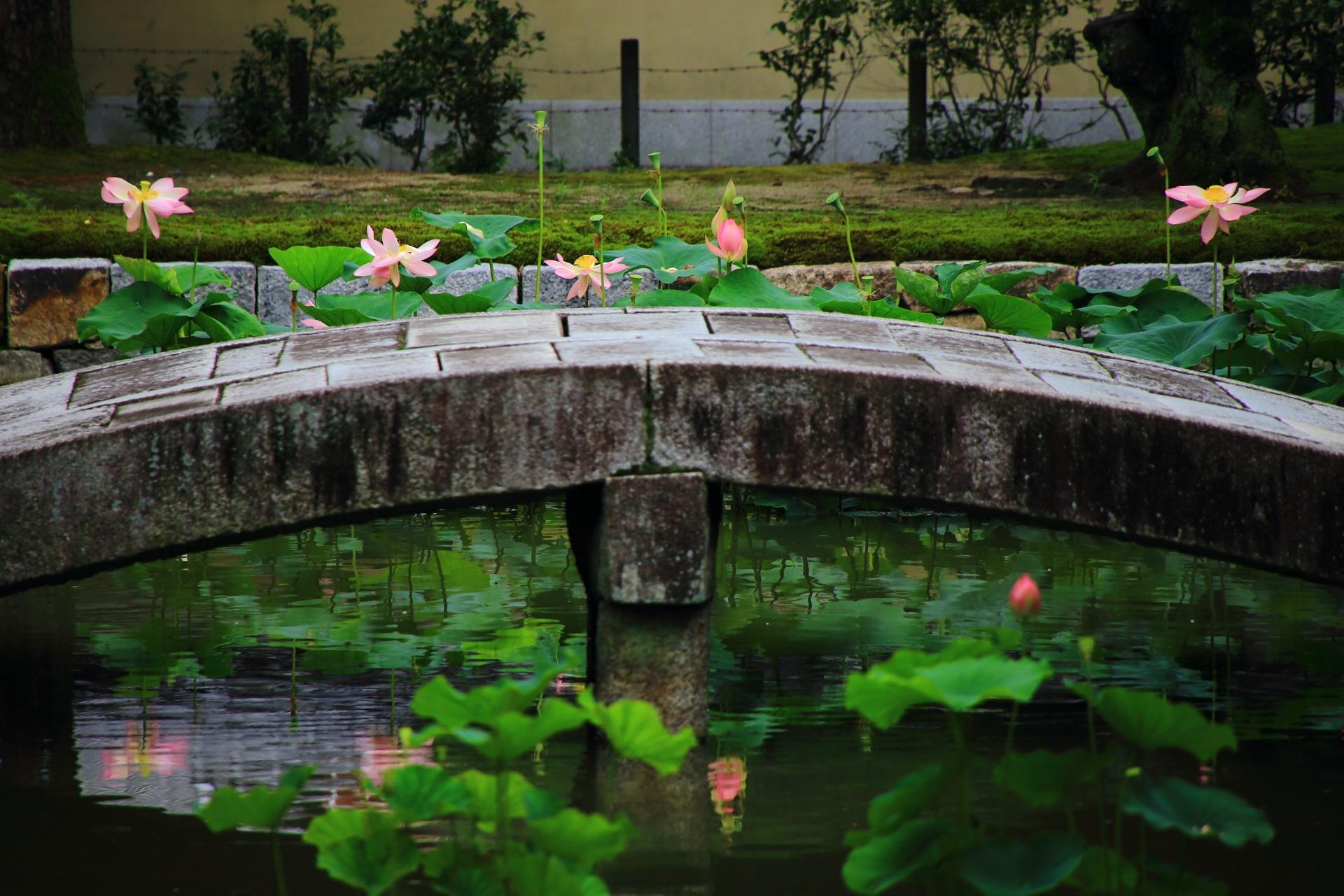 建仁寺の夏の絵になる蓮の風景