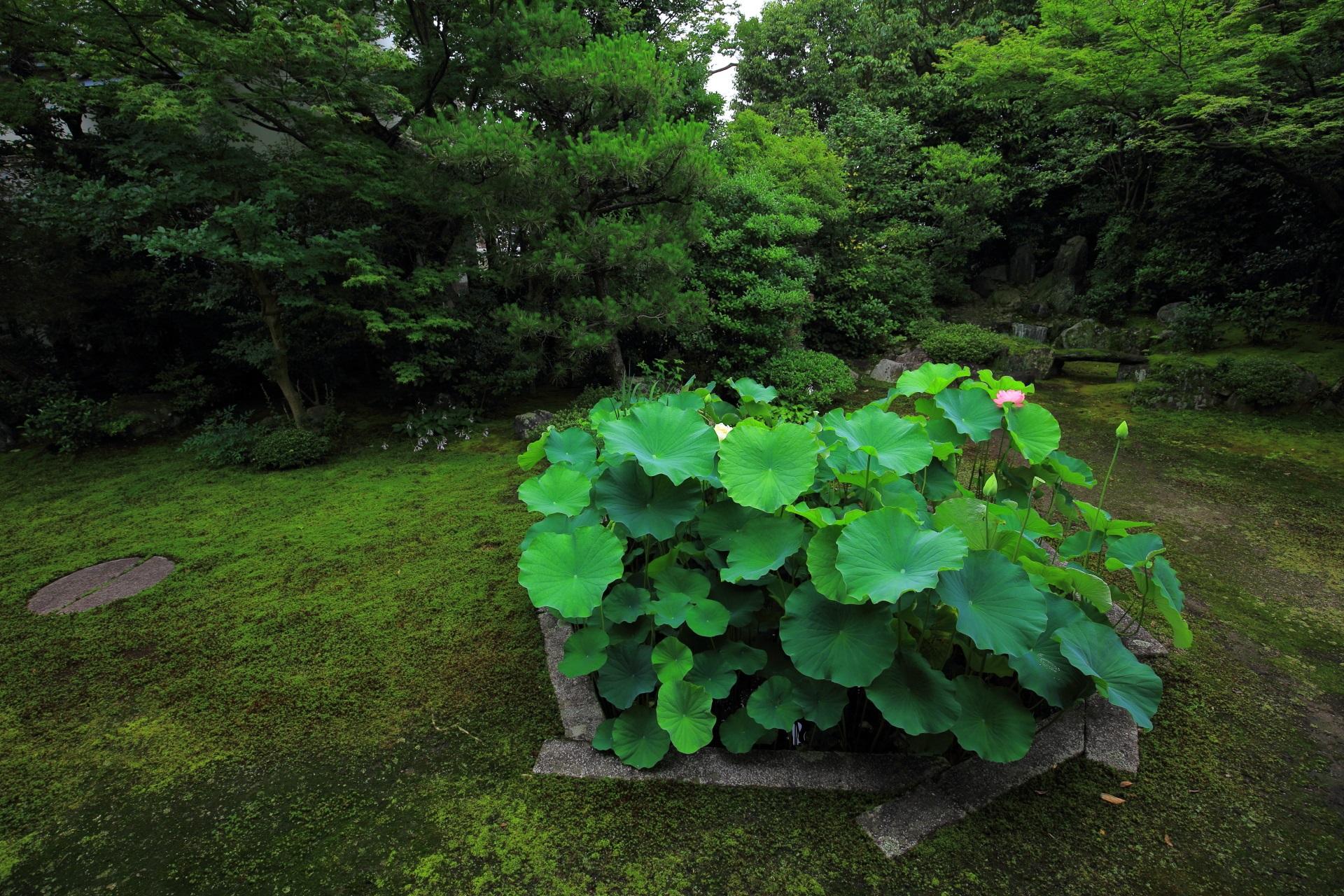 丸い石が「日蓮」の『日』をあらわし蓮池は「日蓮」の『蓮』をあらわす本法寺の巴の庭