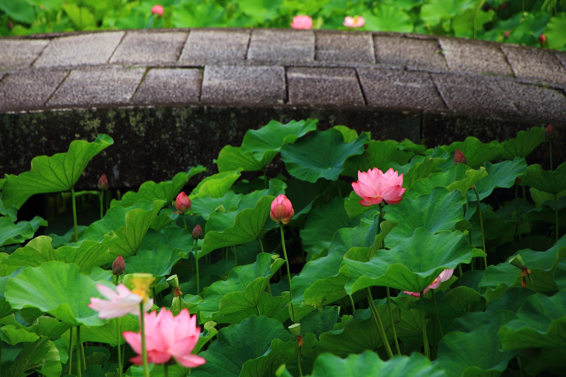 南禅寺の落ち着いた感じの風情ある蓮の風景