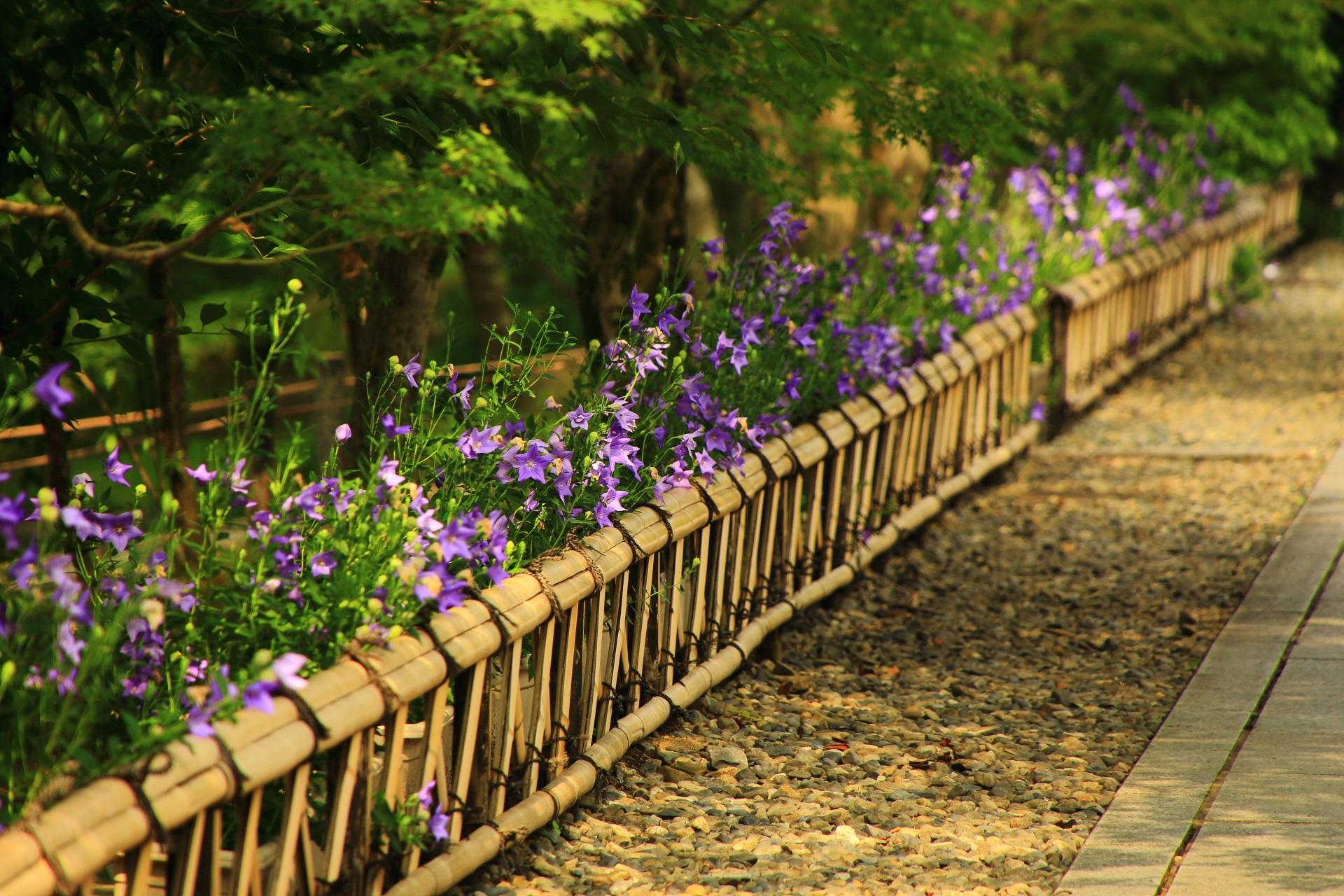 桔梗の花を引き立てる参道沿いの趣きある柵