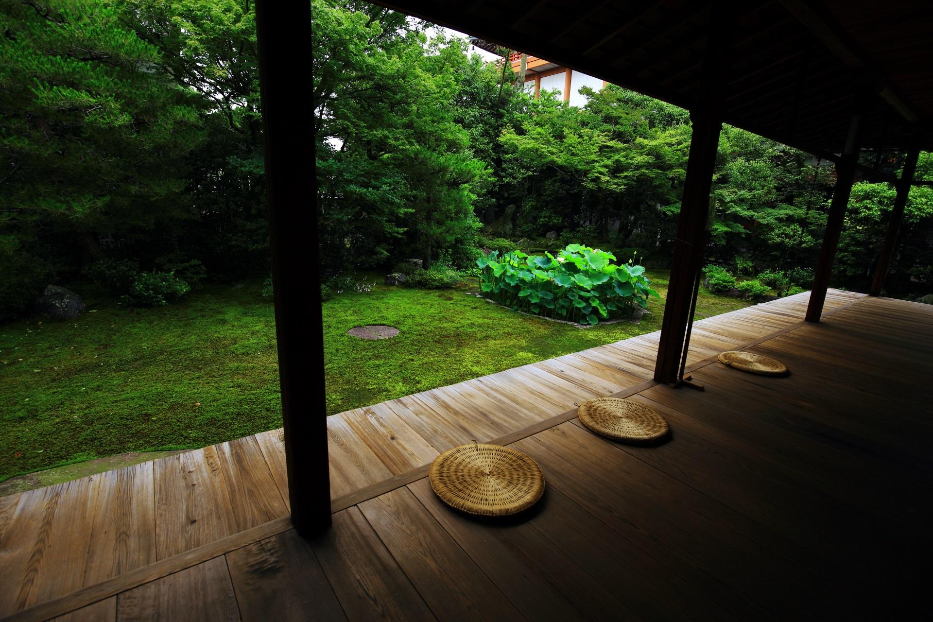 人がいない穴場の本法寺の素晴らしい庭園