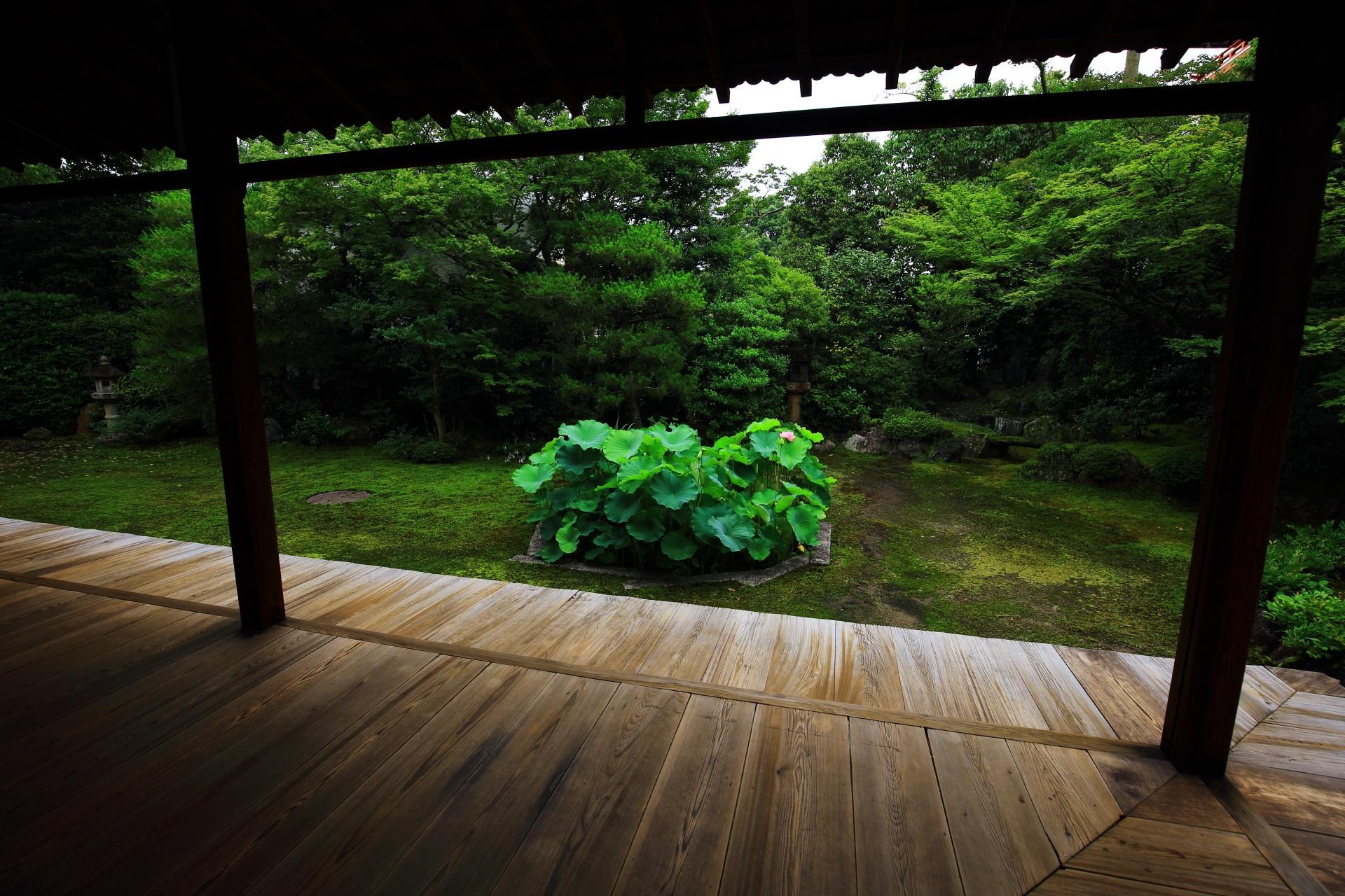 時間を忘れていつまでも見ていられそうな本法寺の巴の庭