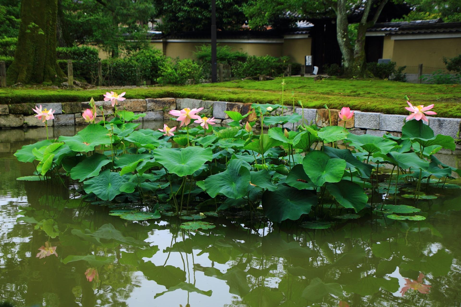 建仁寺の三門と勅使門の間にある蓮池の放生池(ほうじょうち)