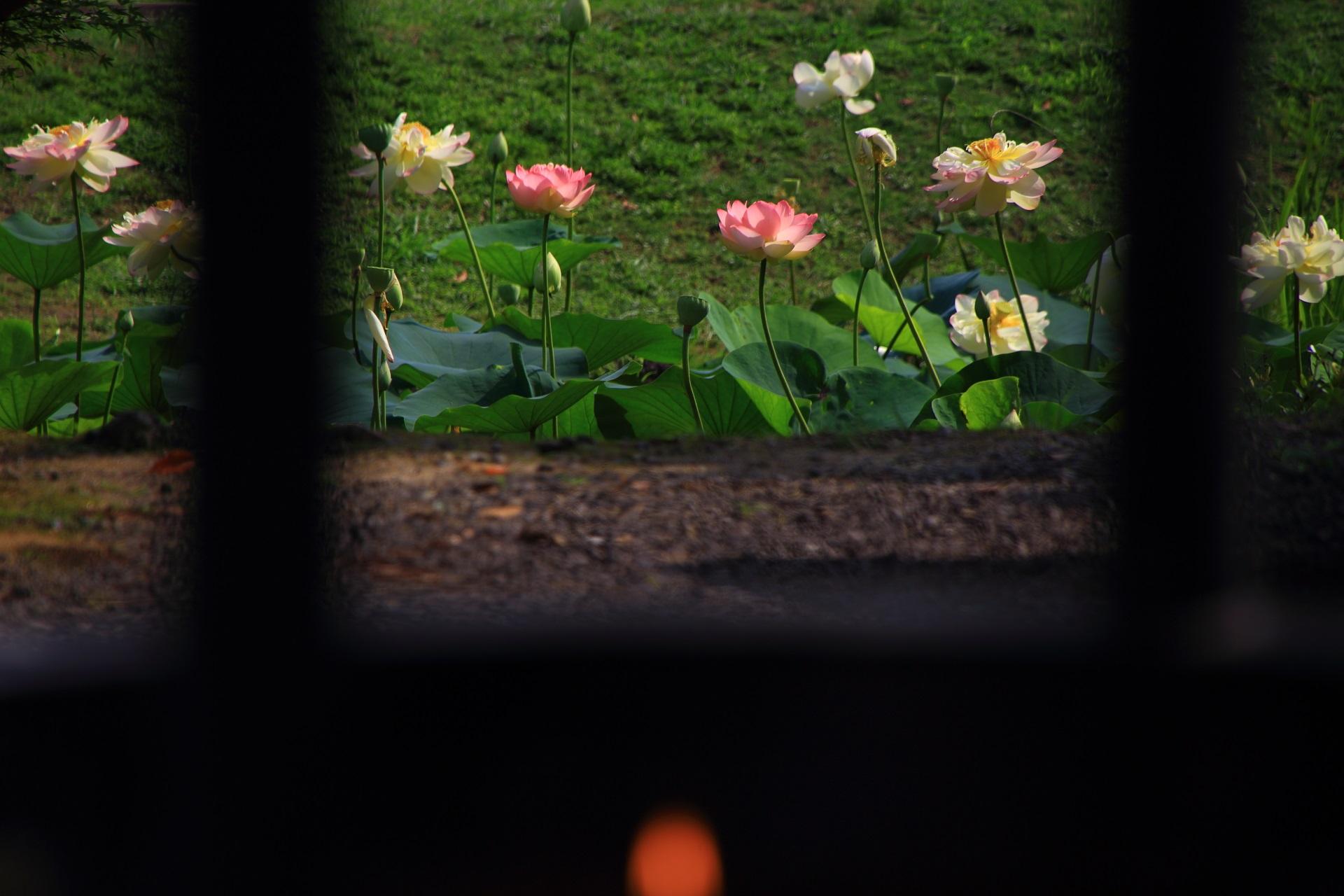 ロウソクの火と蓮の花