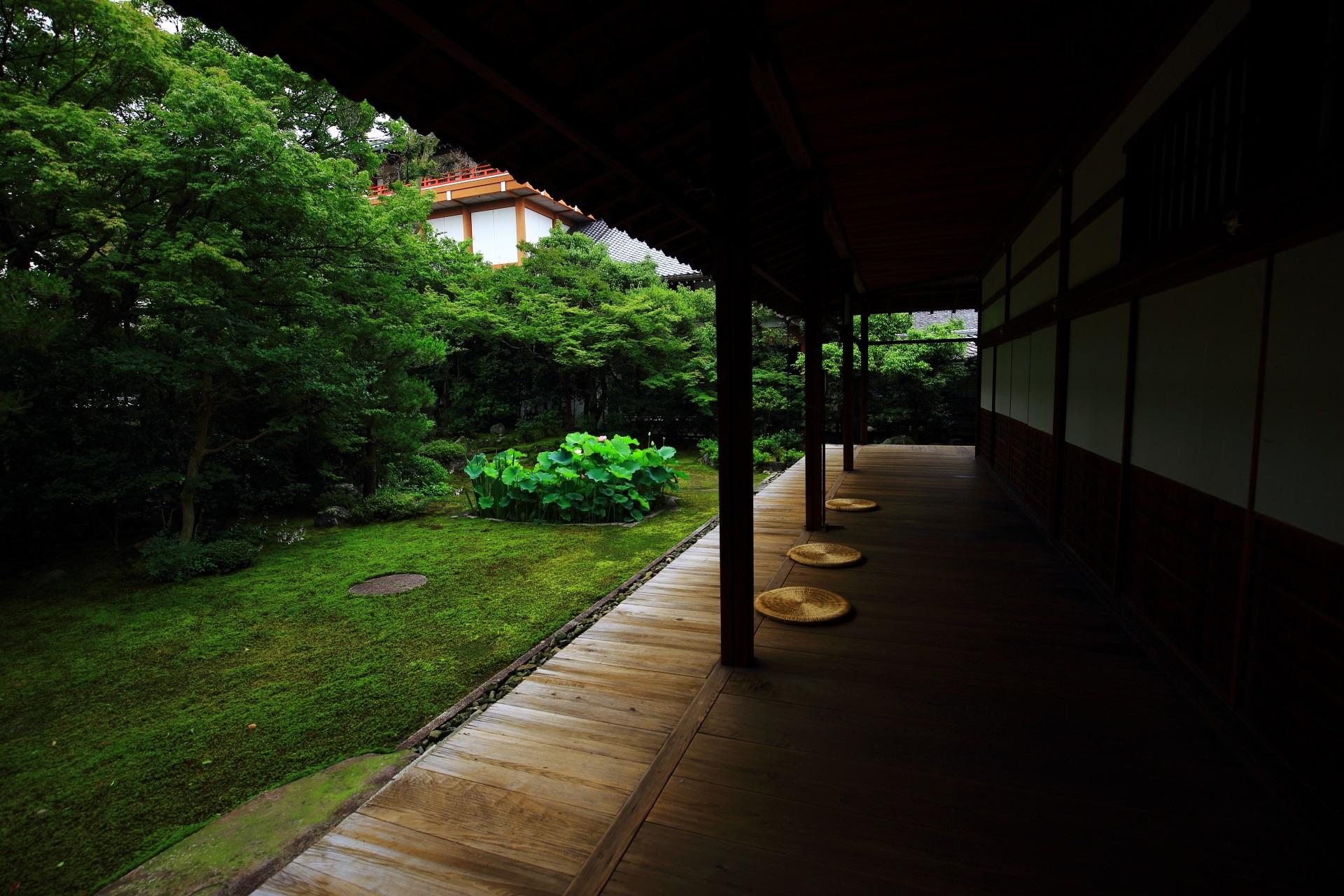 貸切状態の静けさにつつまれた落ち着いた庭園