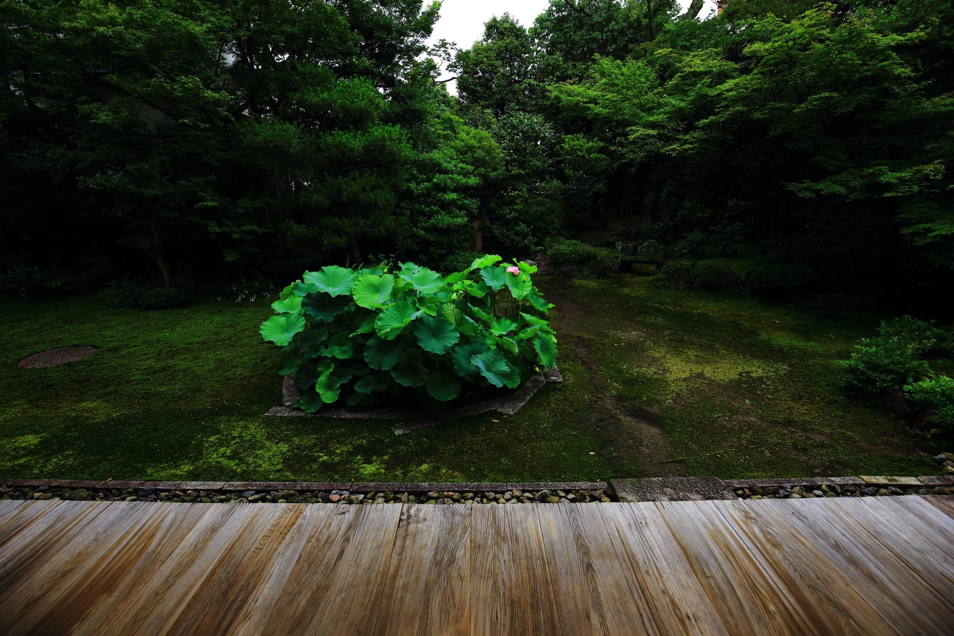 本法寺の枯山水庭園にある十角形の蓮池