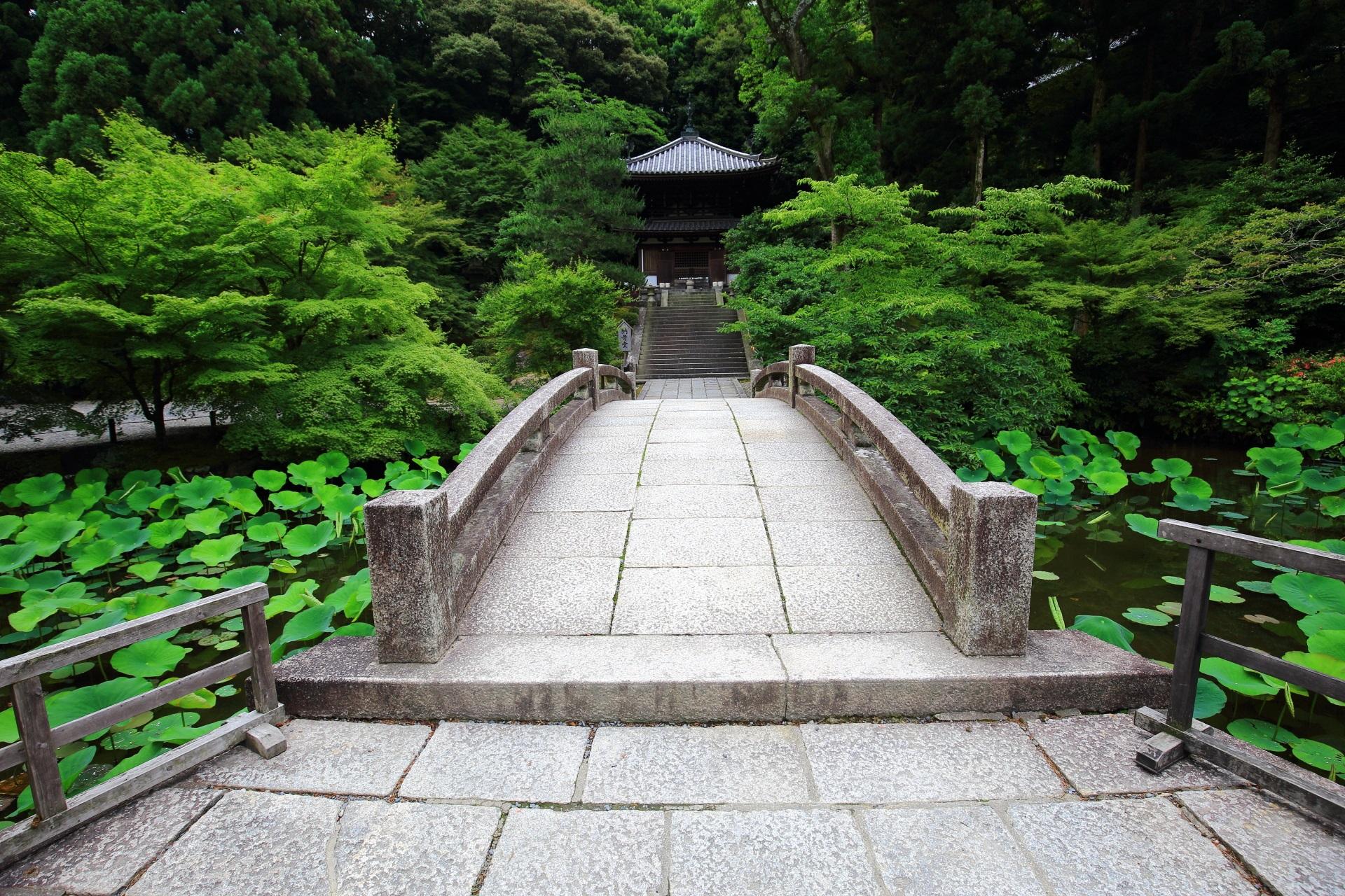 知恩院の納骨堂と蓮池