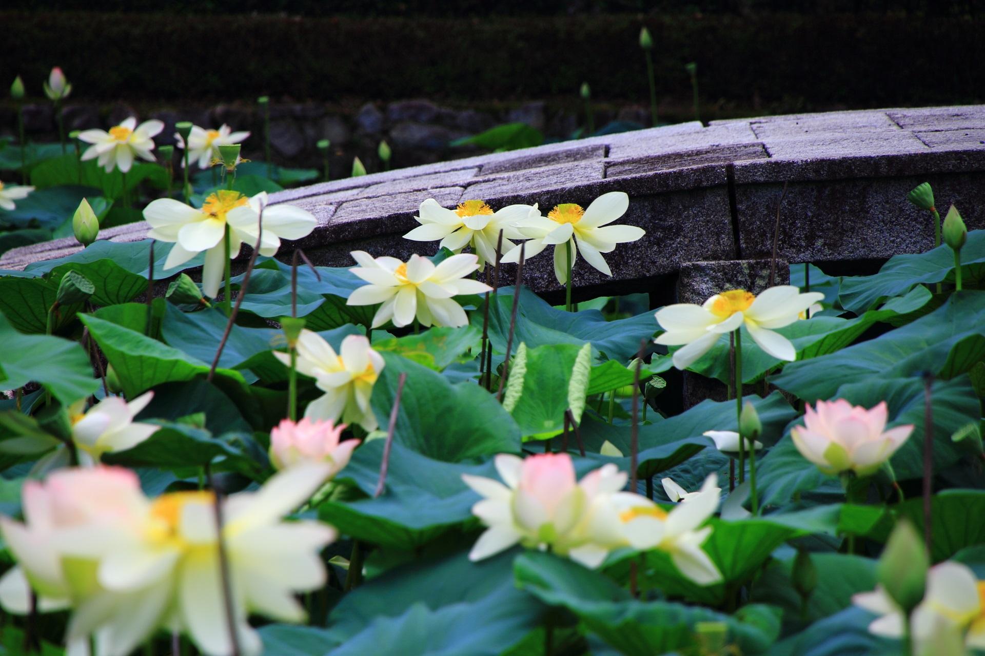 高画質 写真 東福寺 蓮