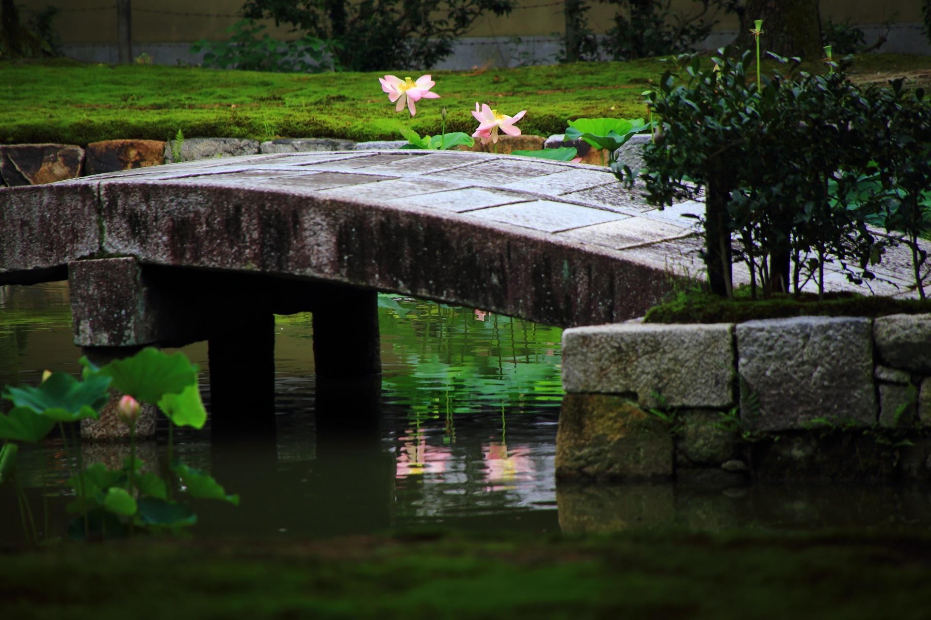 建仁寺の綺麗な蓮の水鏡