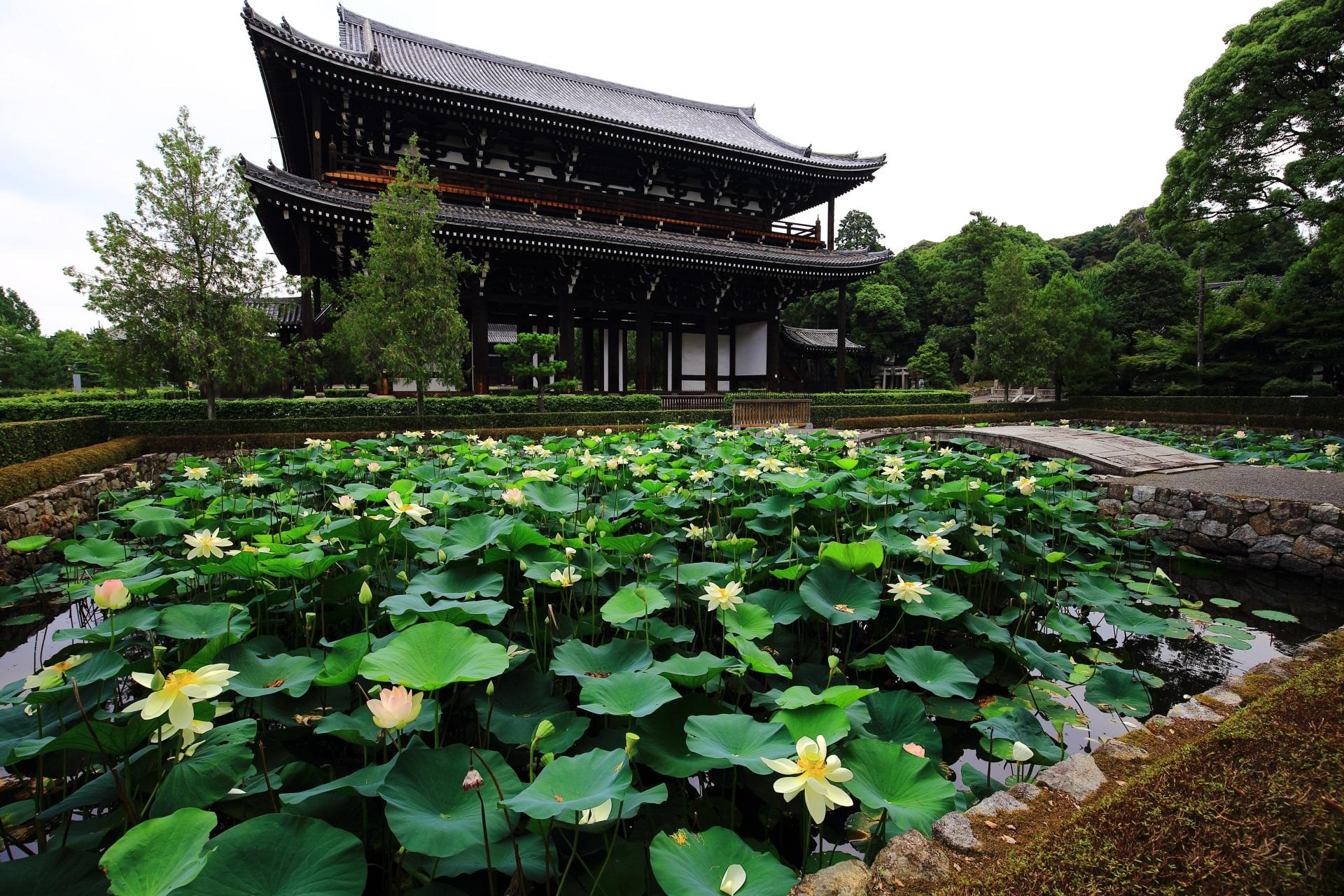東福寺の素晴らしい蓮の花と夏の情景