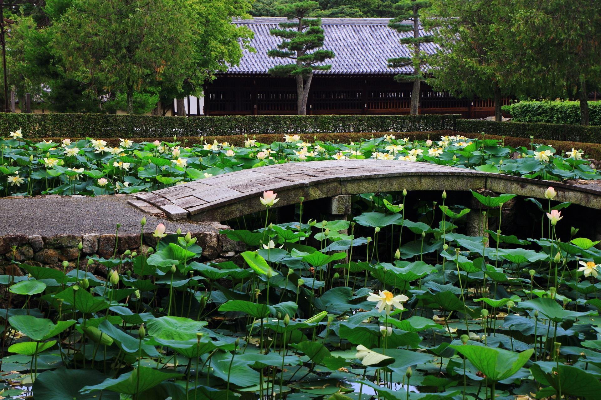 東福寺の蓮池の思遠池の良い雰囲気を醸しだす中央の石橋