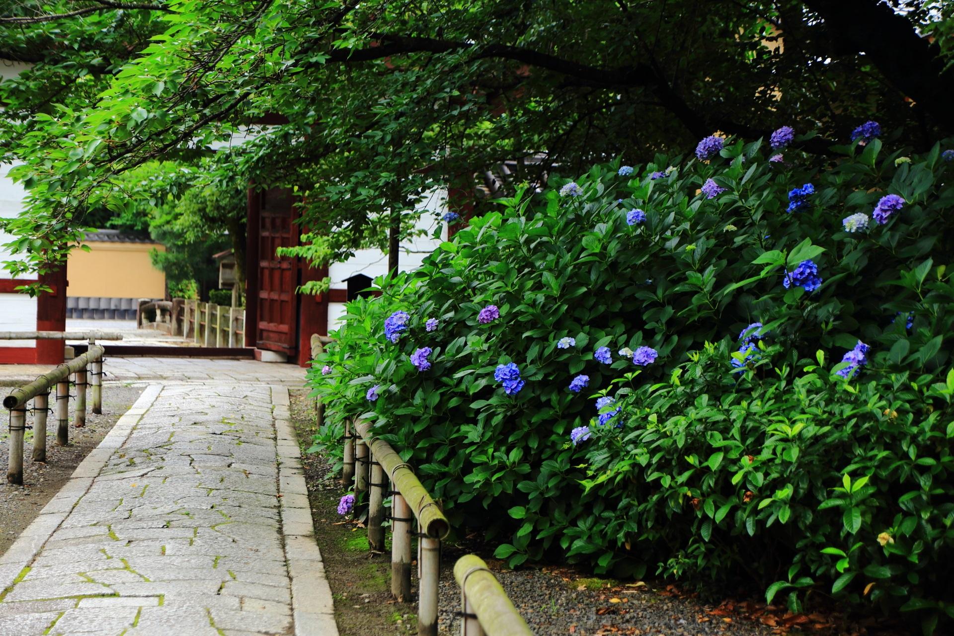 本法寺の仁王門の紫陽花