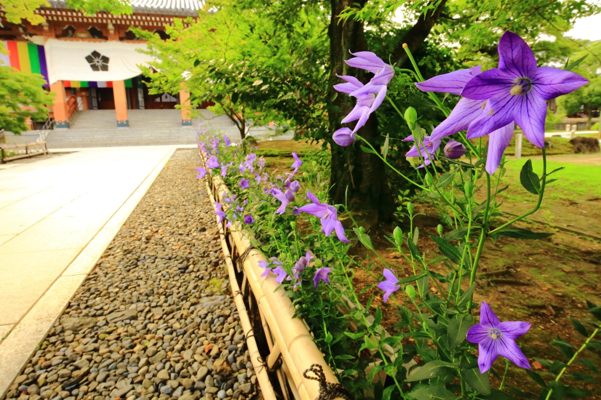 智積院の寺紋と桔梗の花