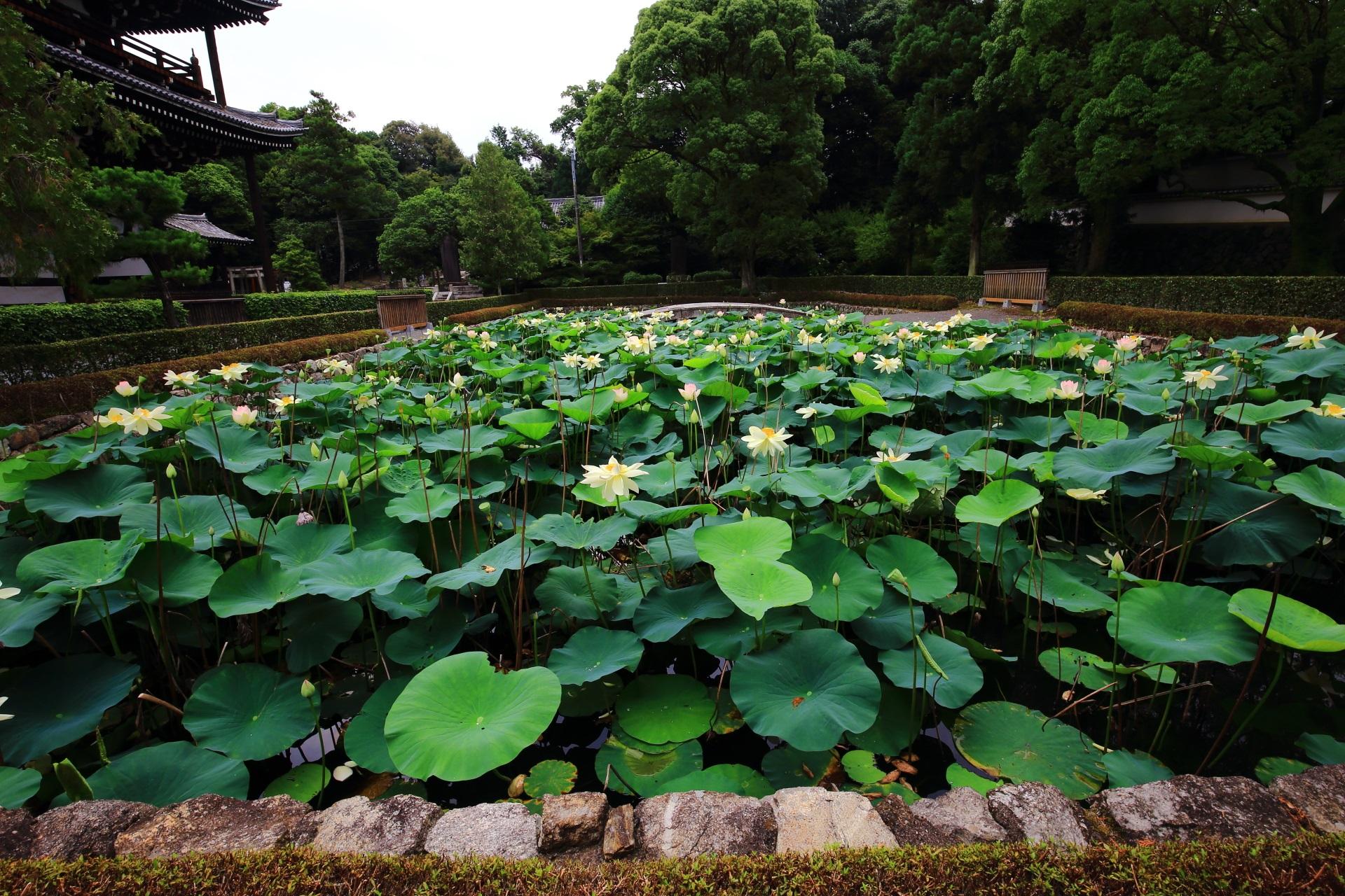 東福寺の三門南側にある蓮池の「思遠池」